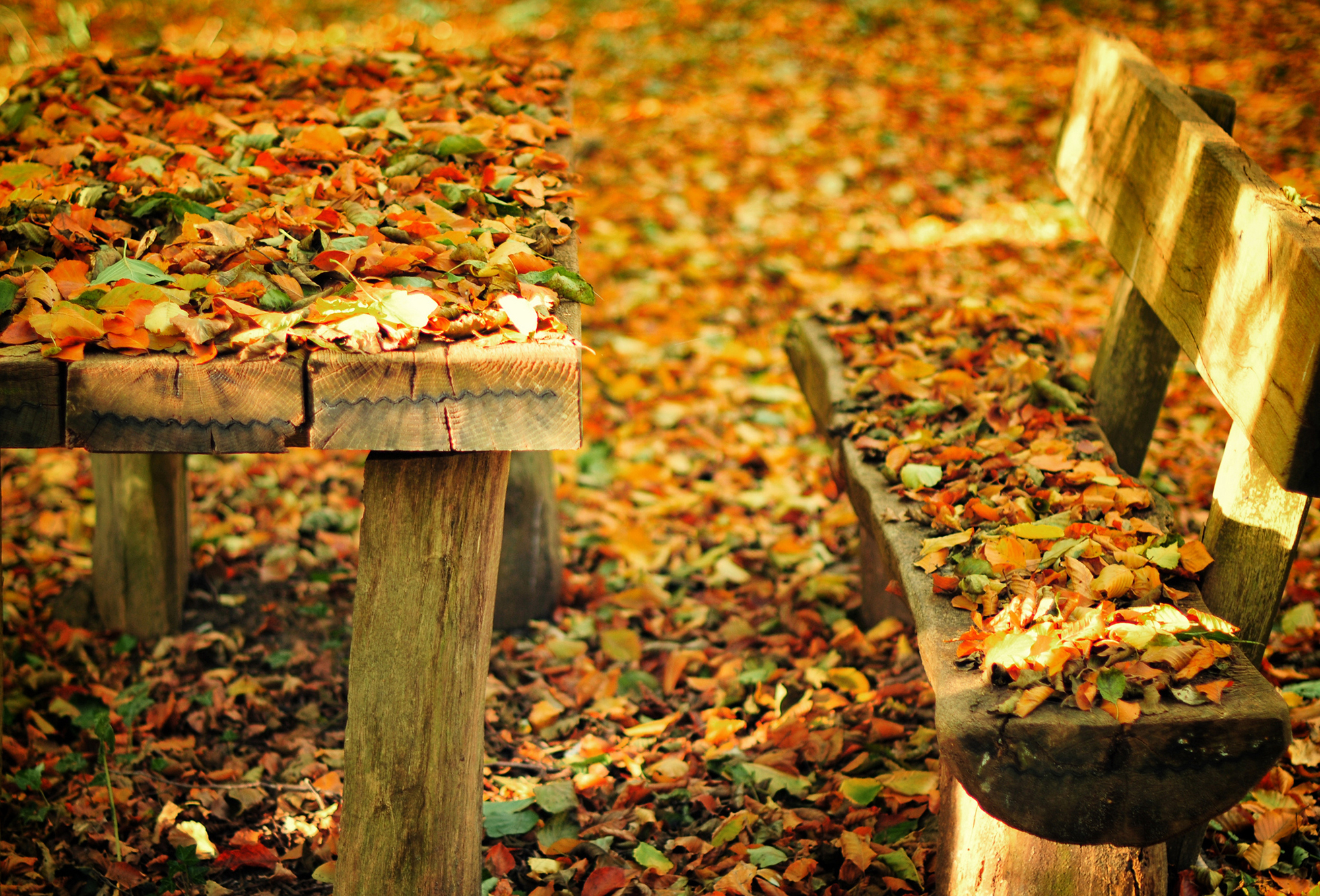 Осень листья лавка стол  № 3187384  скачать