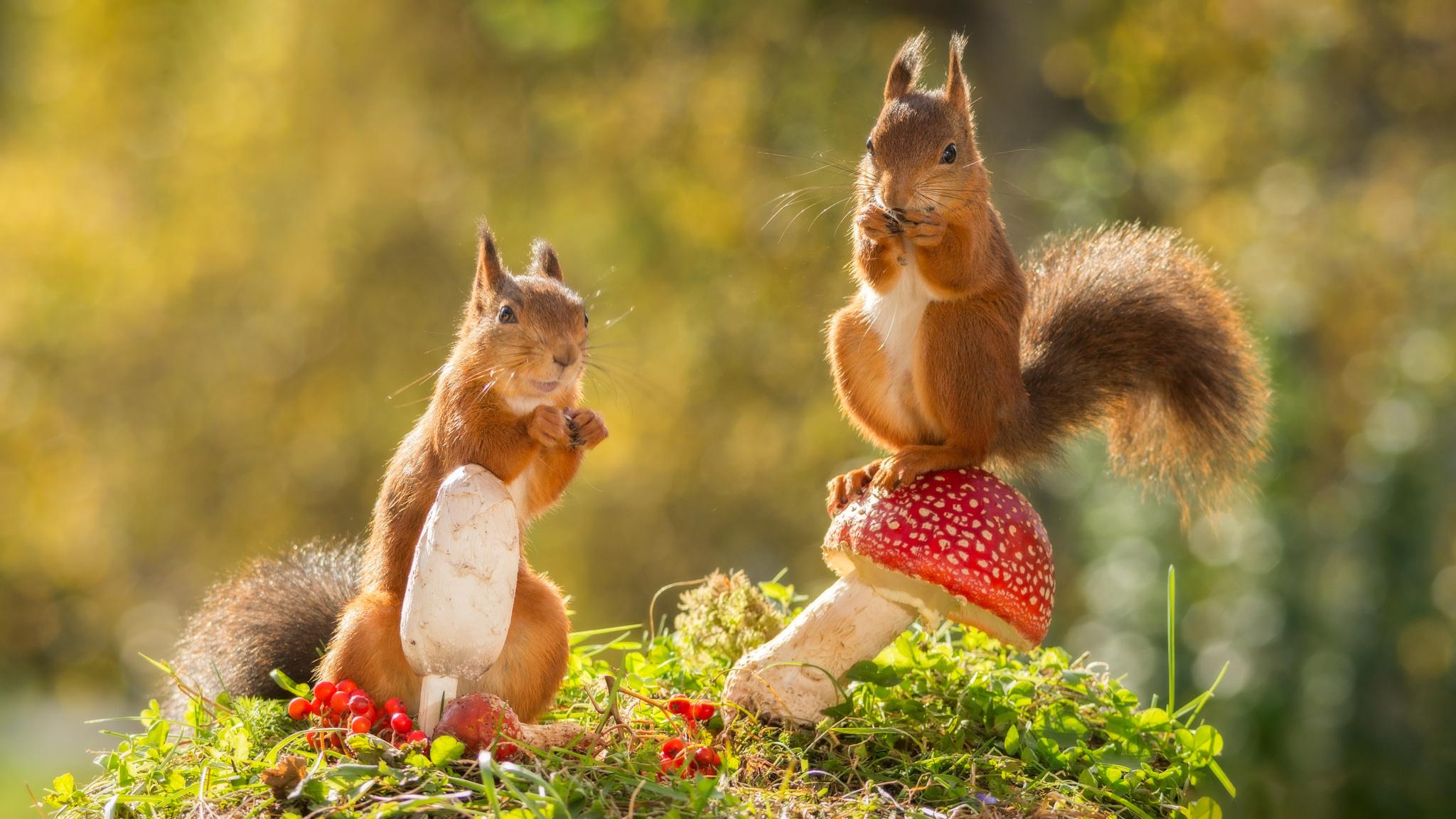 Обои на рабочий стол осень и животные скачать бесплатно