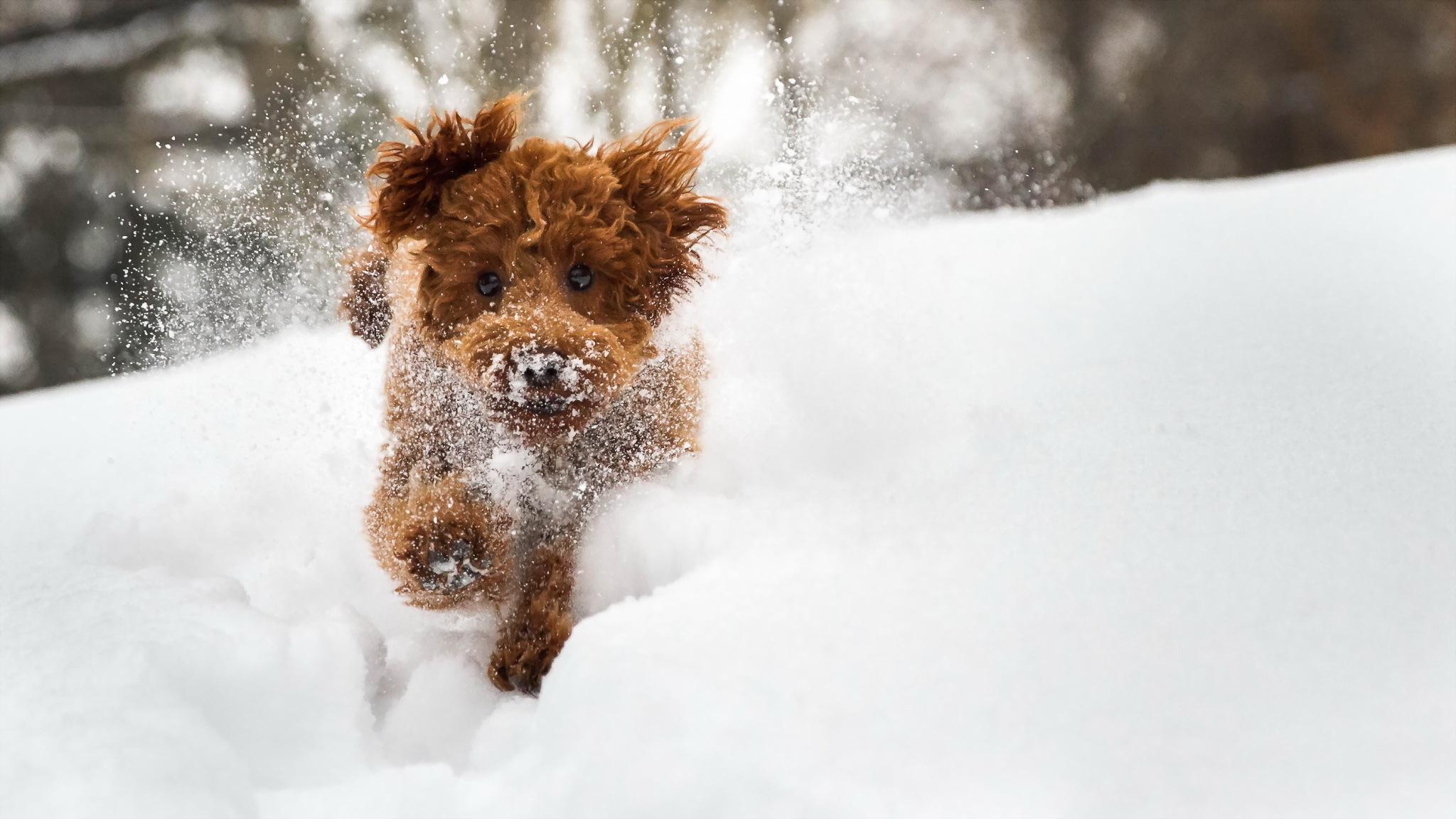 Прикольные картинки коты собачки зима снег, картинки