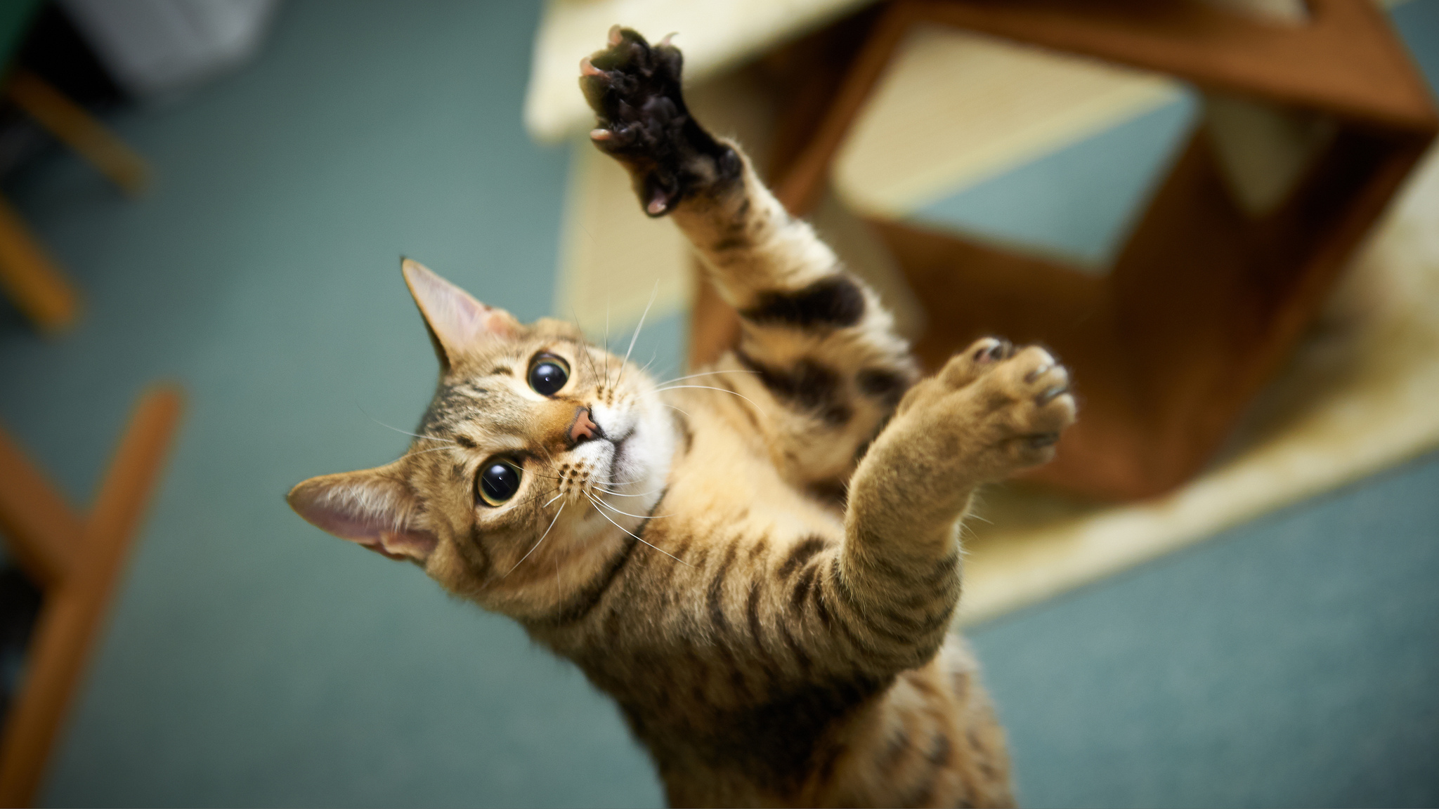 барельефов триумфальную картинки прикольные кошки большое разрешение условия содержания