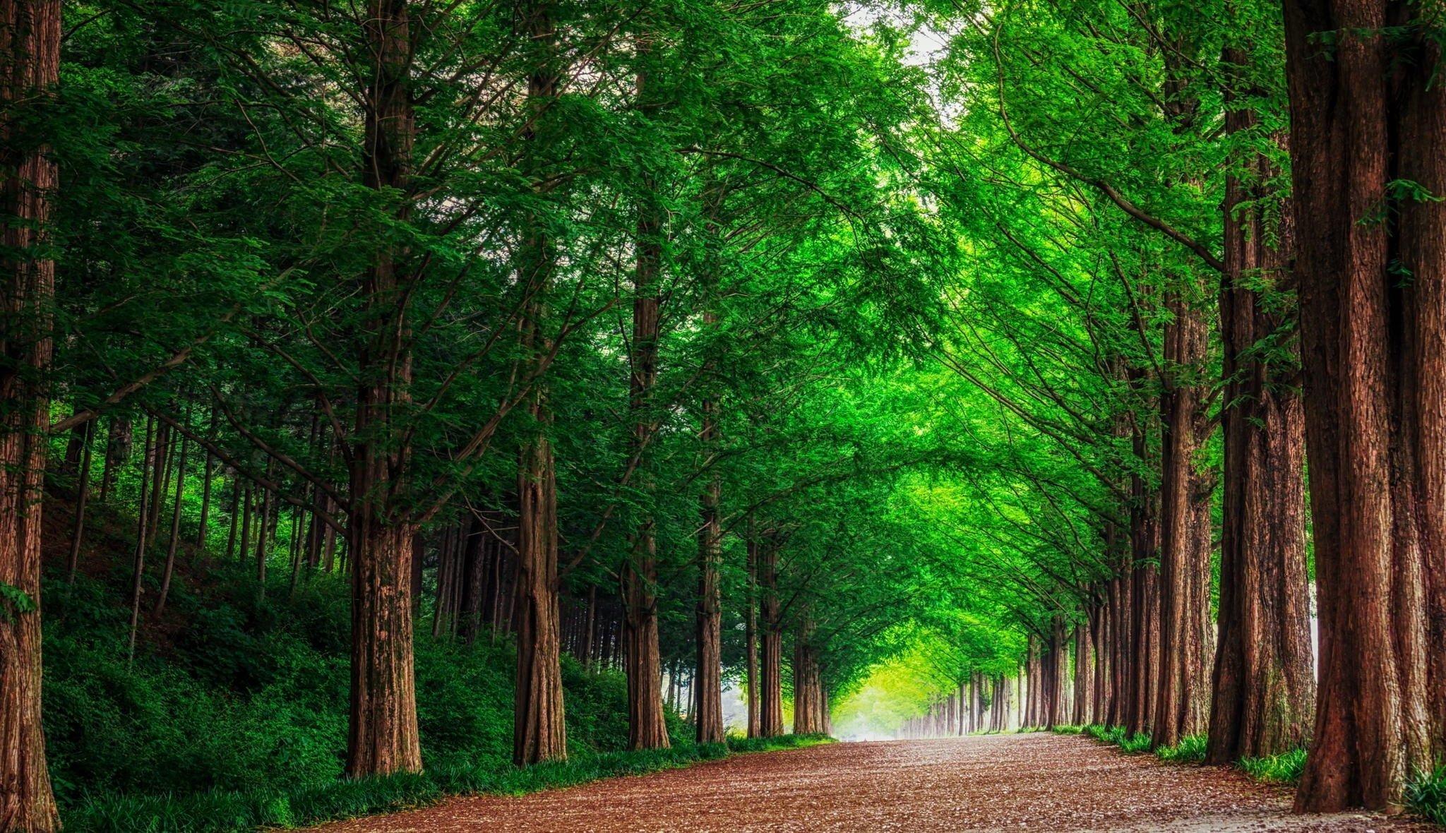 v-lesu-na-prirode-foto-zrelih-berushih