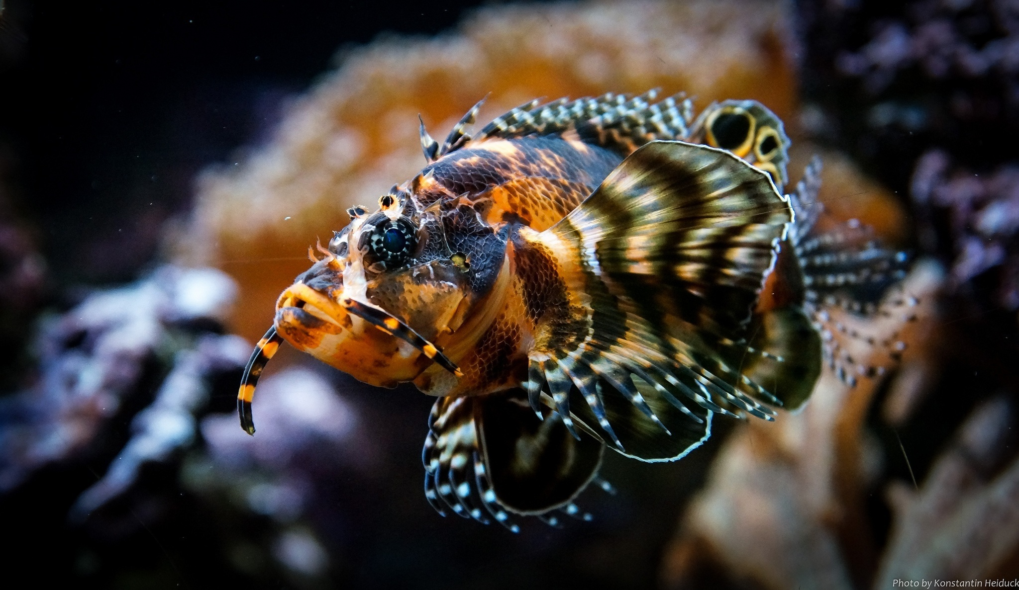 самые красивые фоновые картинки подводных животных поверхность которой