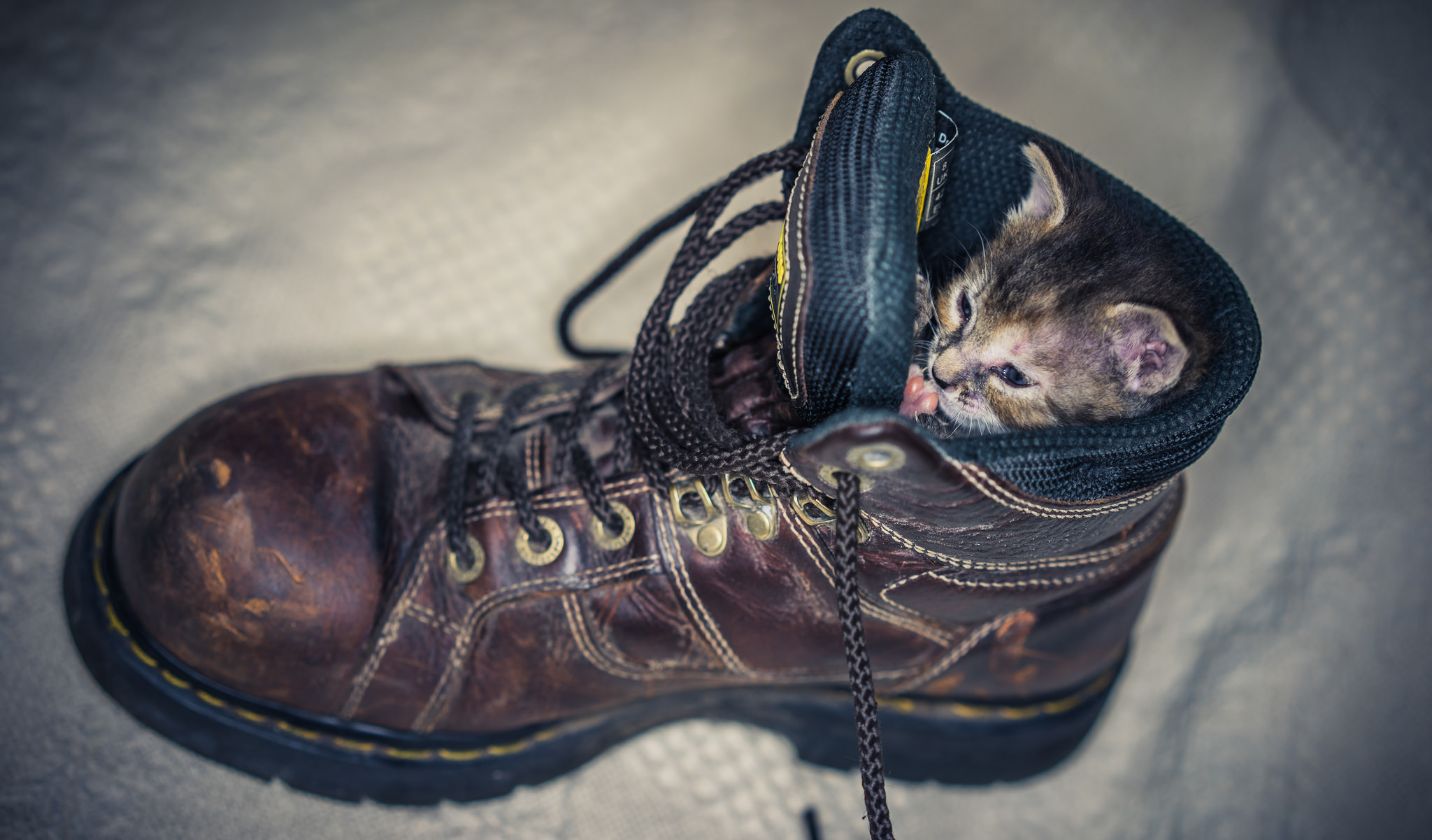 котенок в ботинке  № 2016555 без смс