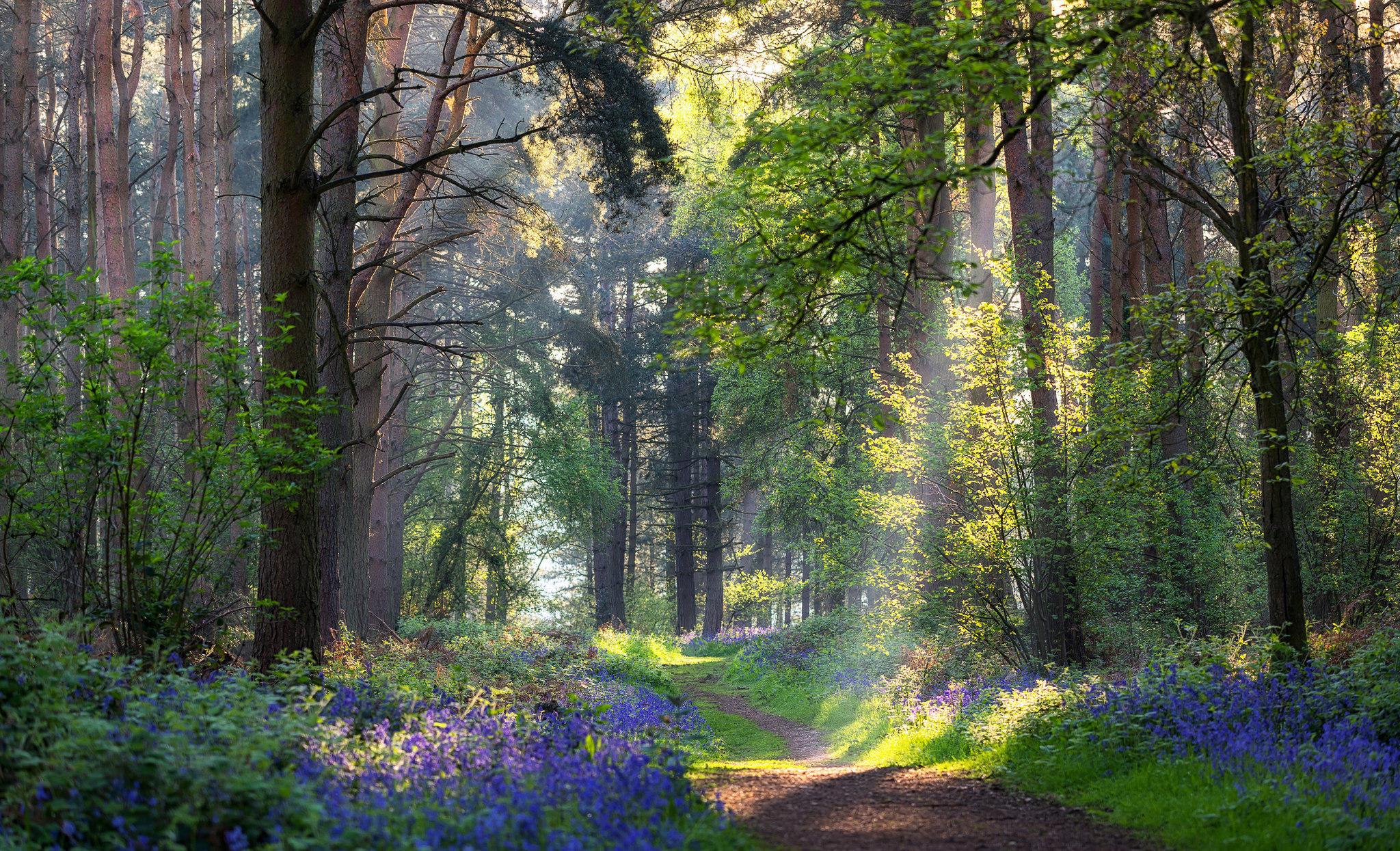 Лето фото красивые природа лес