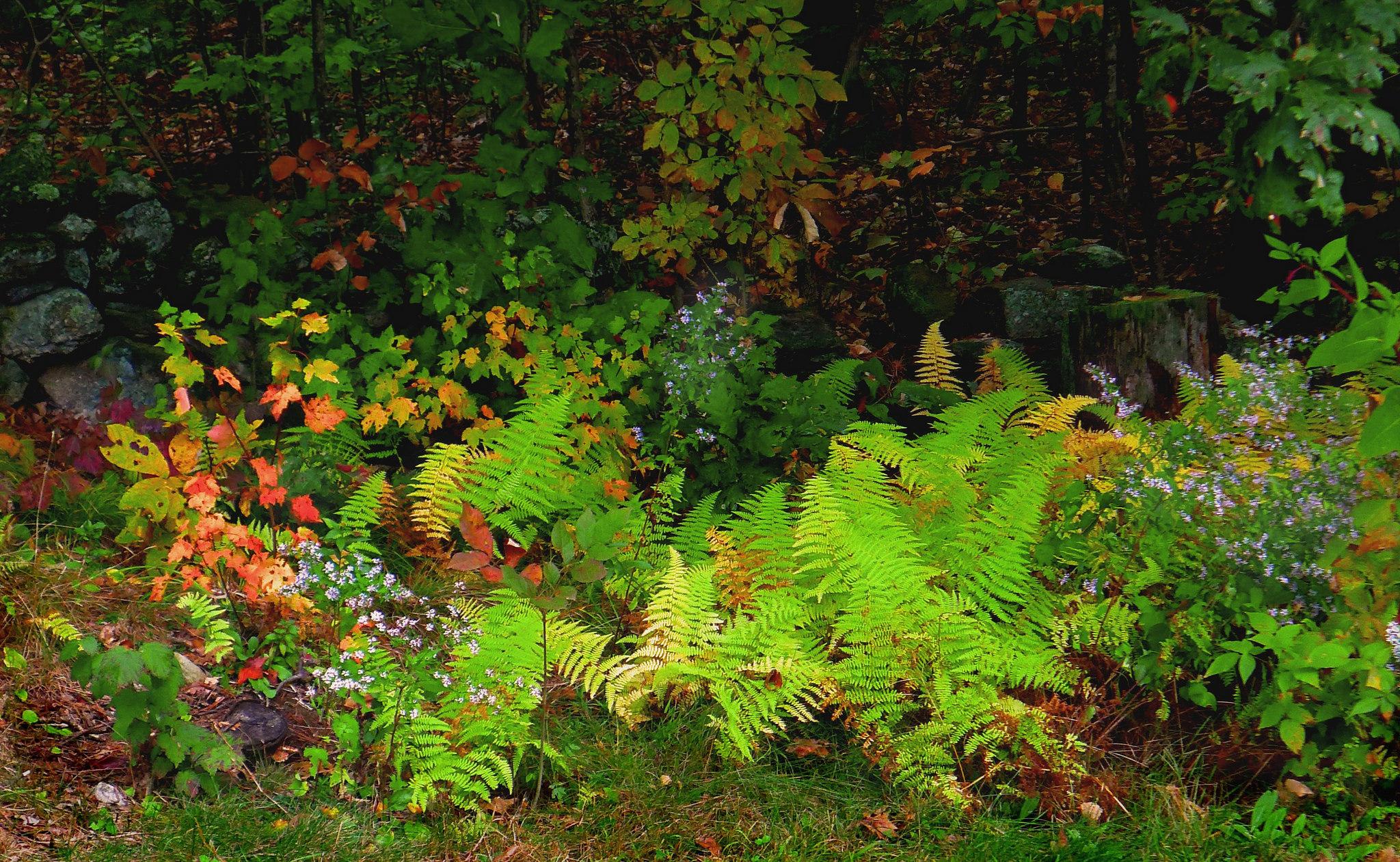 хранилище осенние лесные цветы картинки сорт белорусского