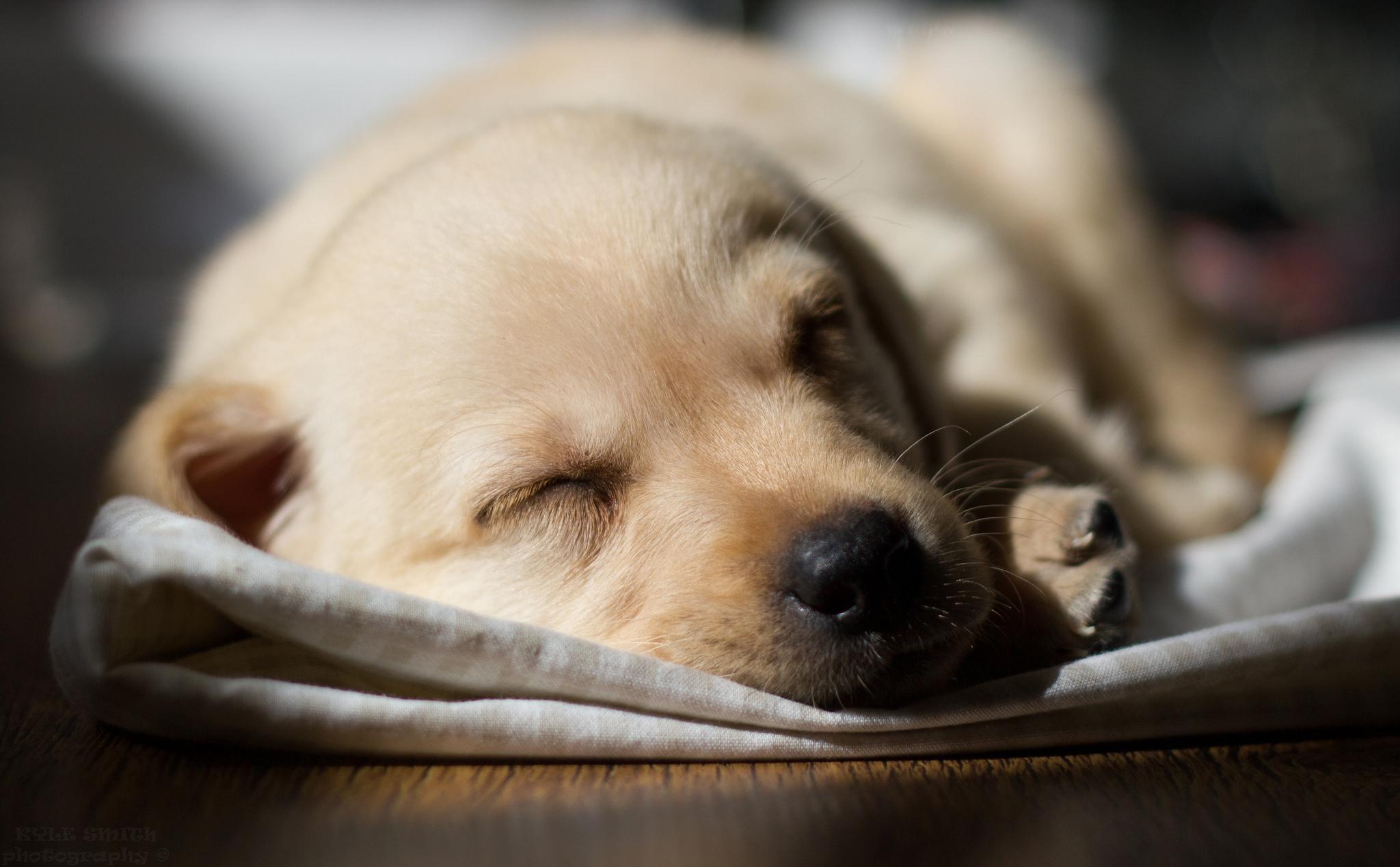 собака кровать  № 2010249 загрузить