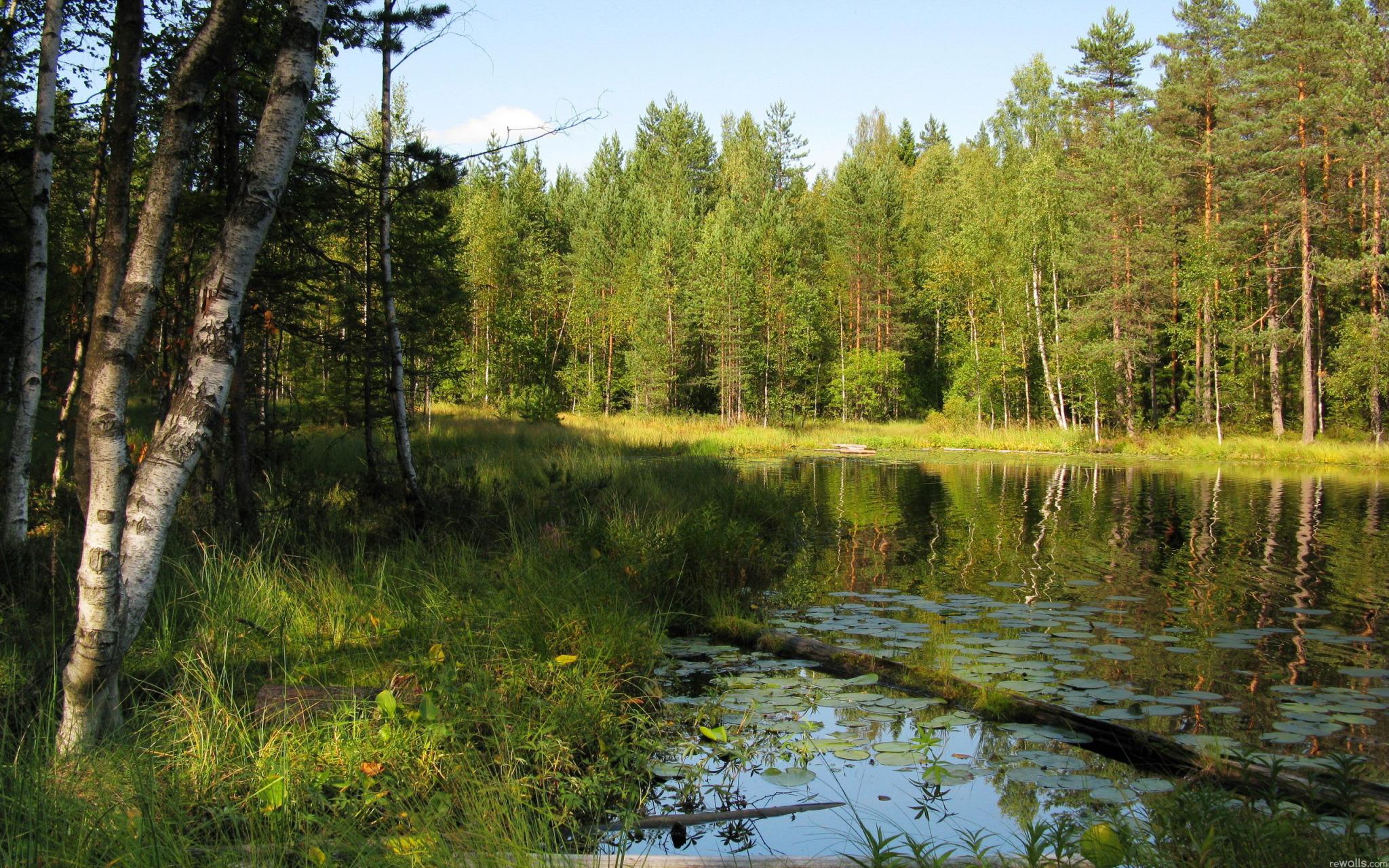 Картинки природа лесные озера лето 2