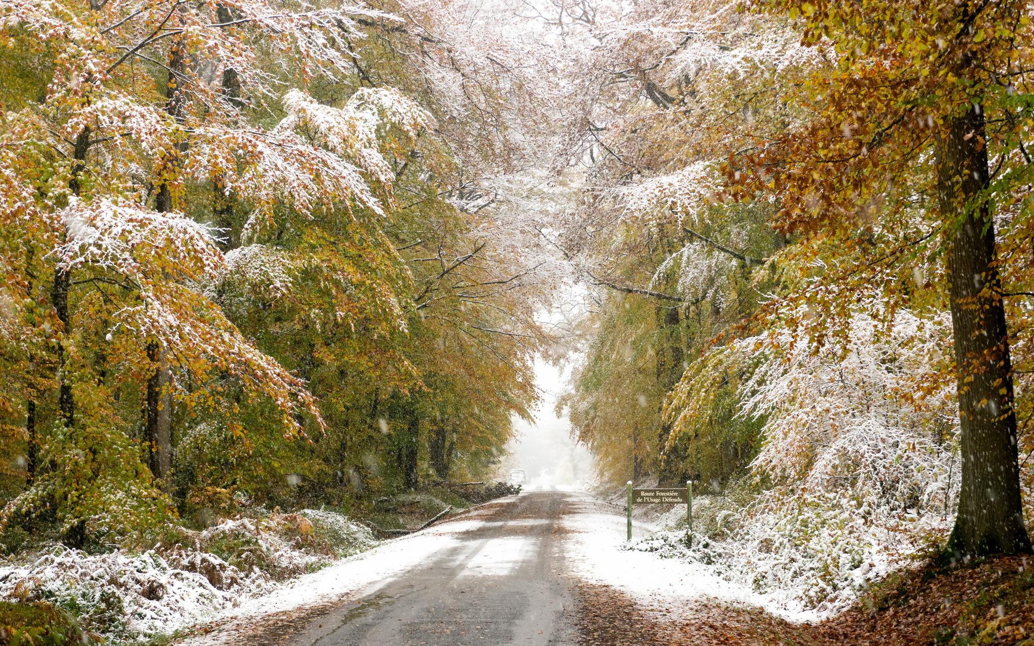 пейзаж осень в снегу файлы проверяются
