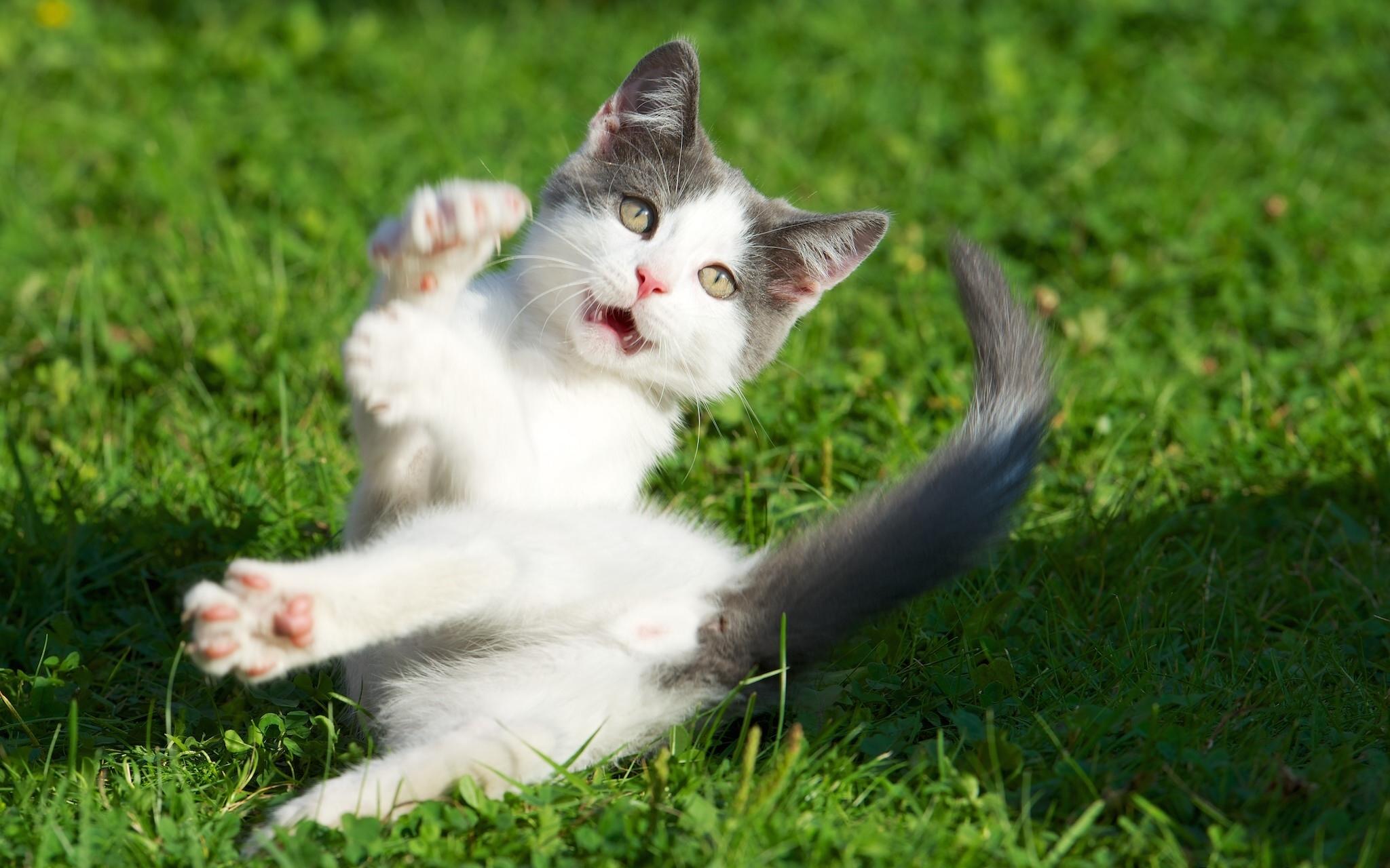 Котенок на траве  № 2959607 бесплатно