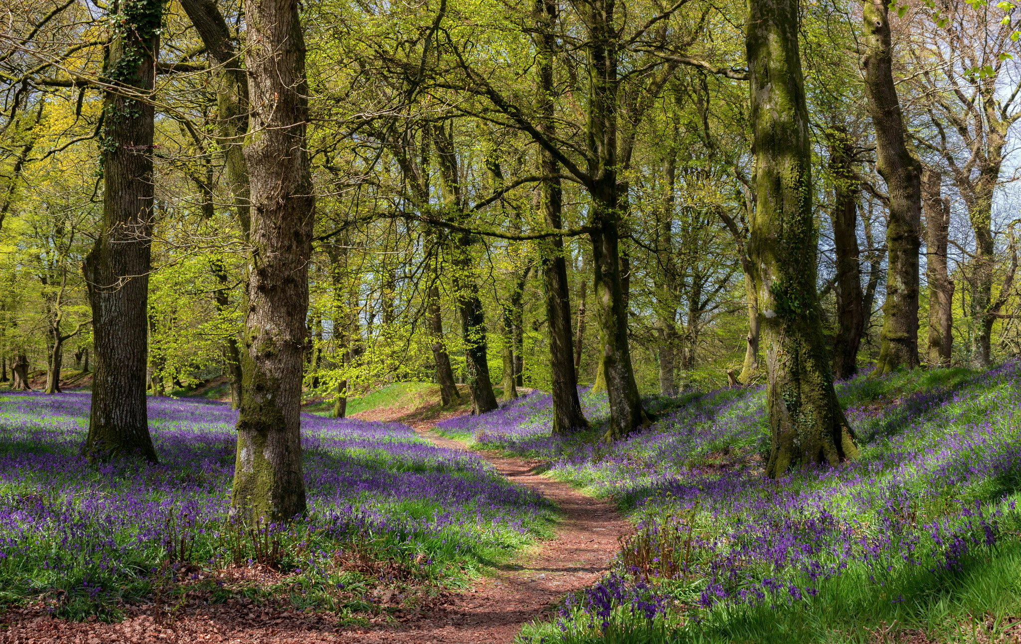 красивые картинки весенние лес маленький очень стеснительный