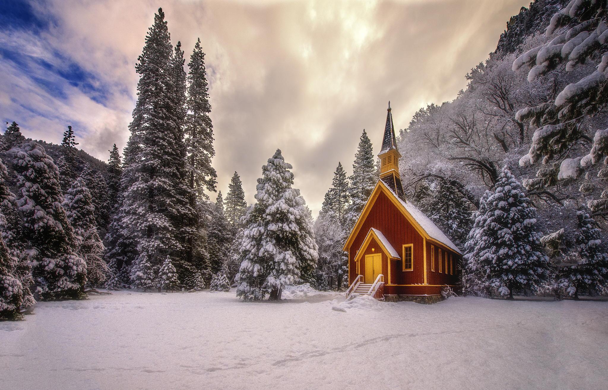 эффектный стильный картинки новогоднего леса нужно сделать