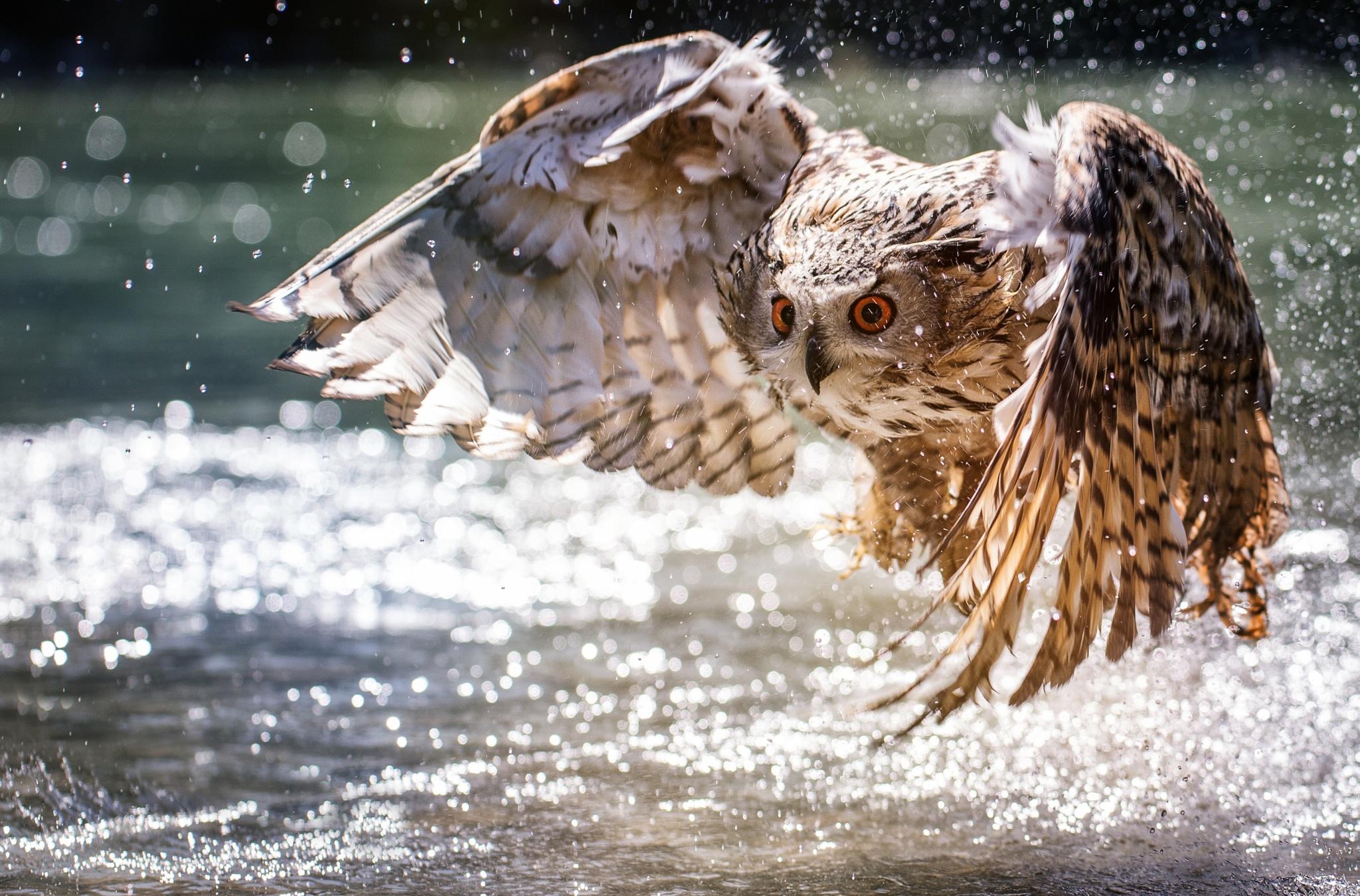 Летящая сова  № 481292 без смс