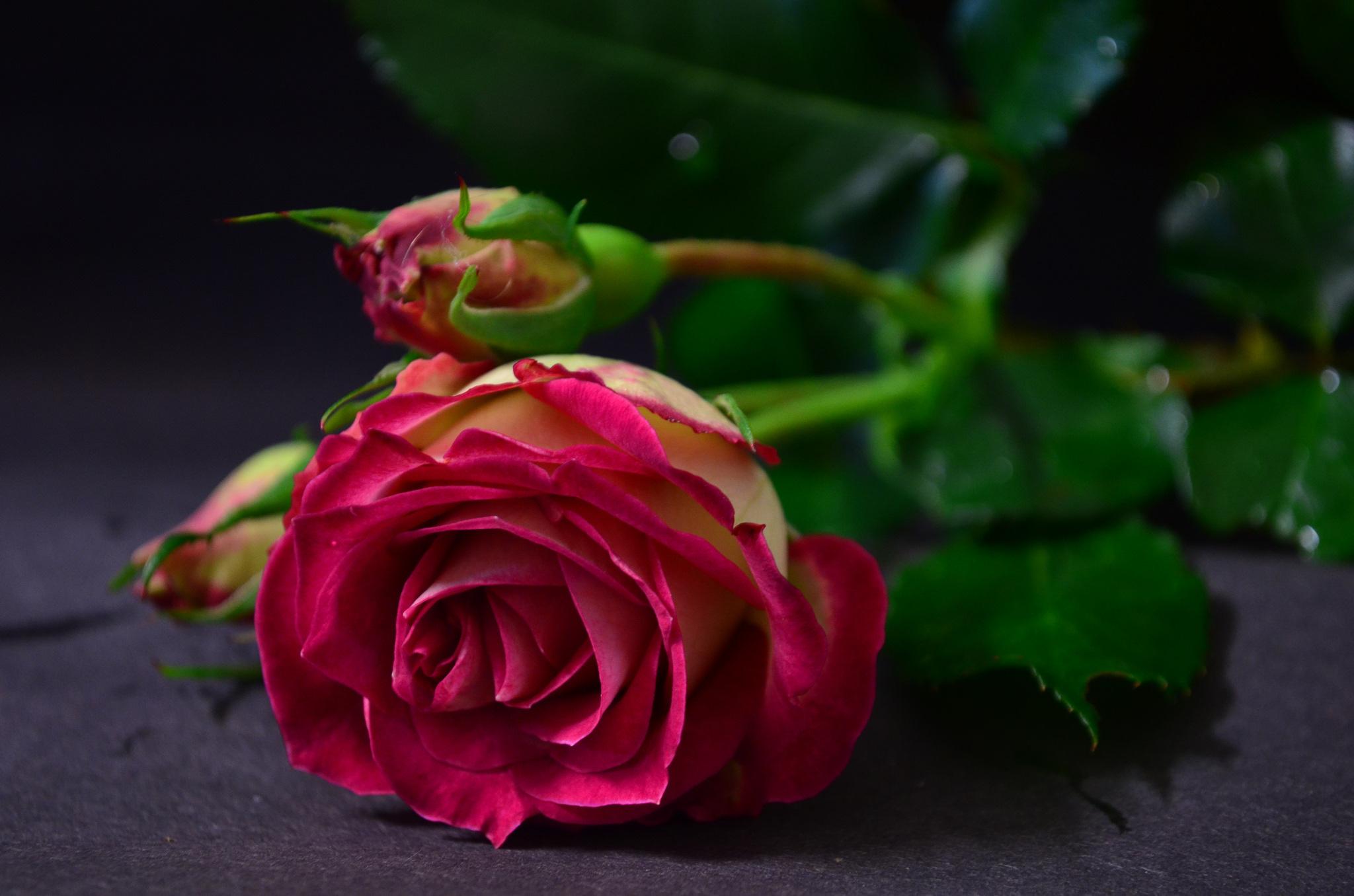 Фото красивых бутонов цветов