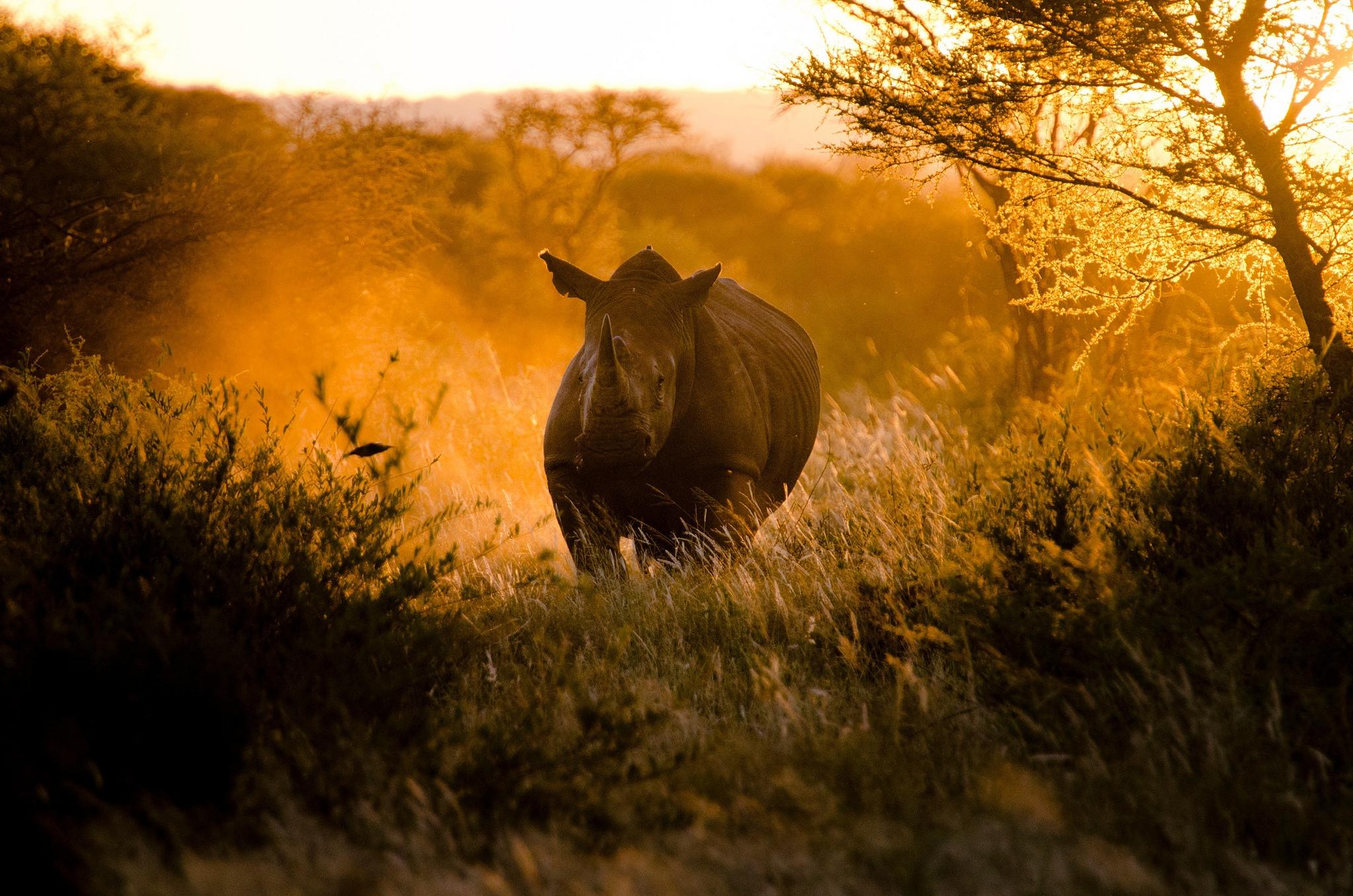 Животные магаданской области фото такой машиной
