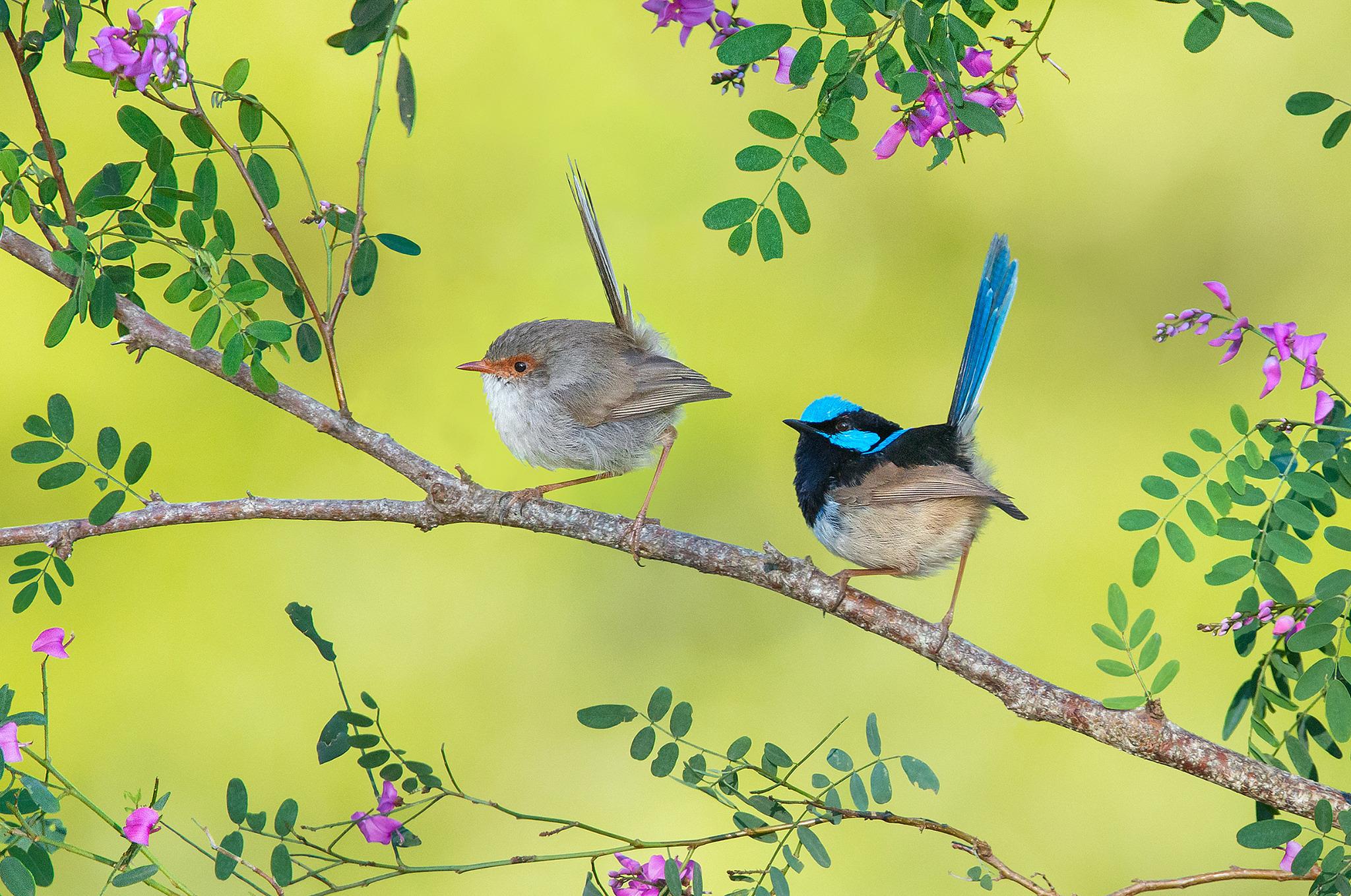 картинки птицы на ветвях такой