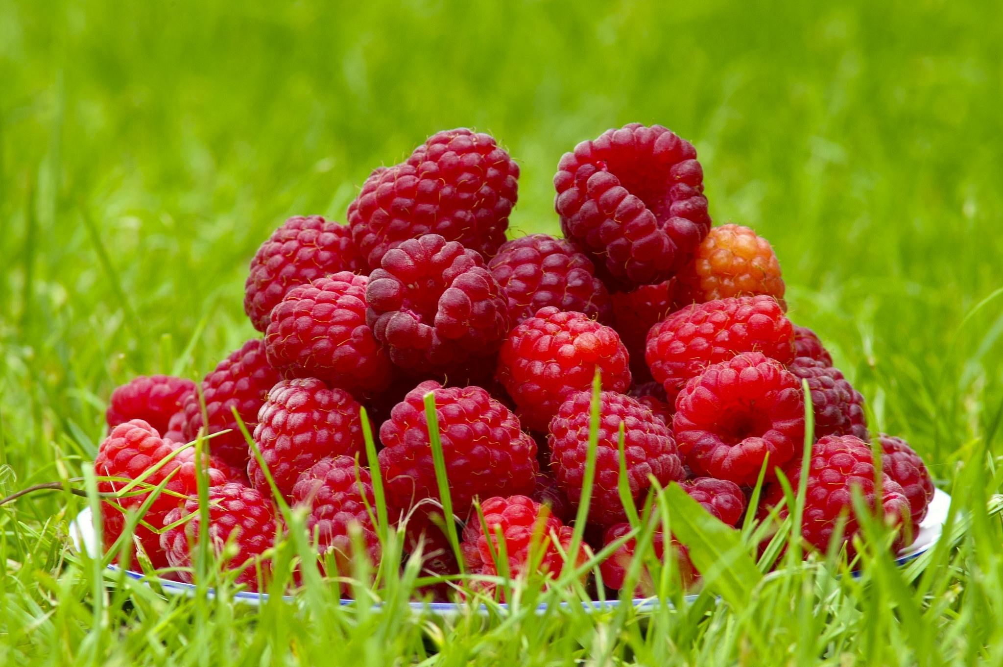 так летние ягодки картинки без