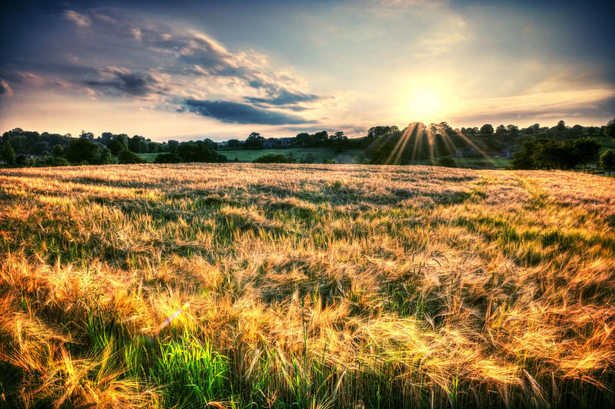 природа трава горизонт солнце деревья  № 2760795 бесплатно