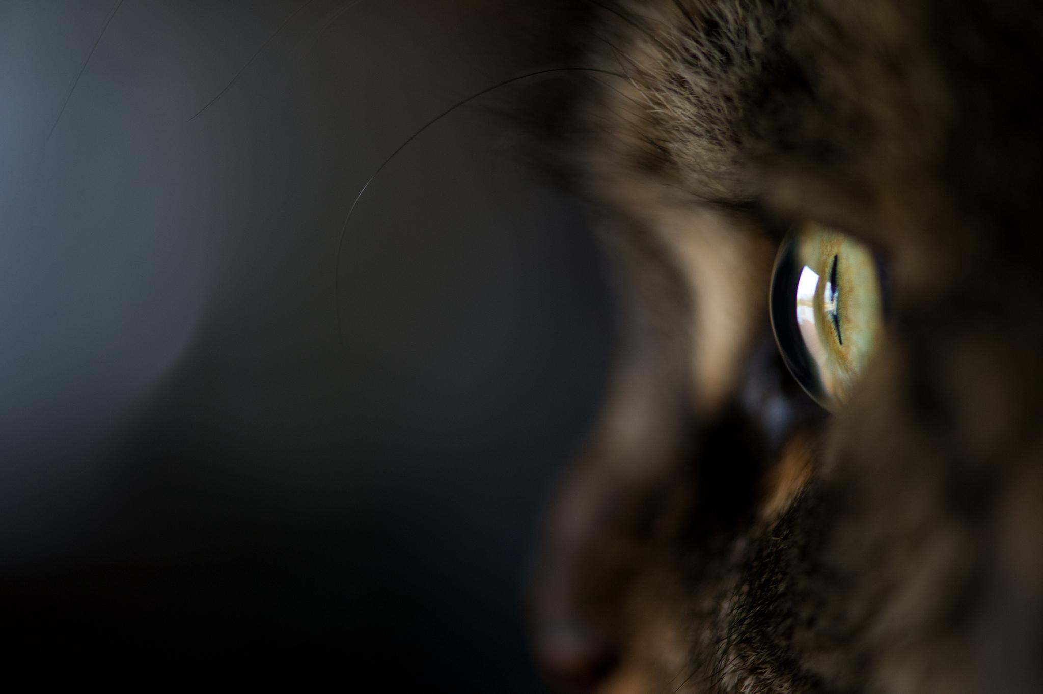 кошка глаза шерсть  № 1963648 без смс