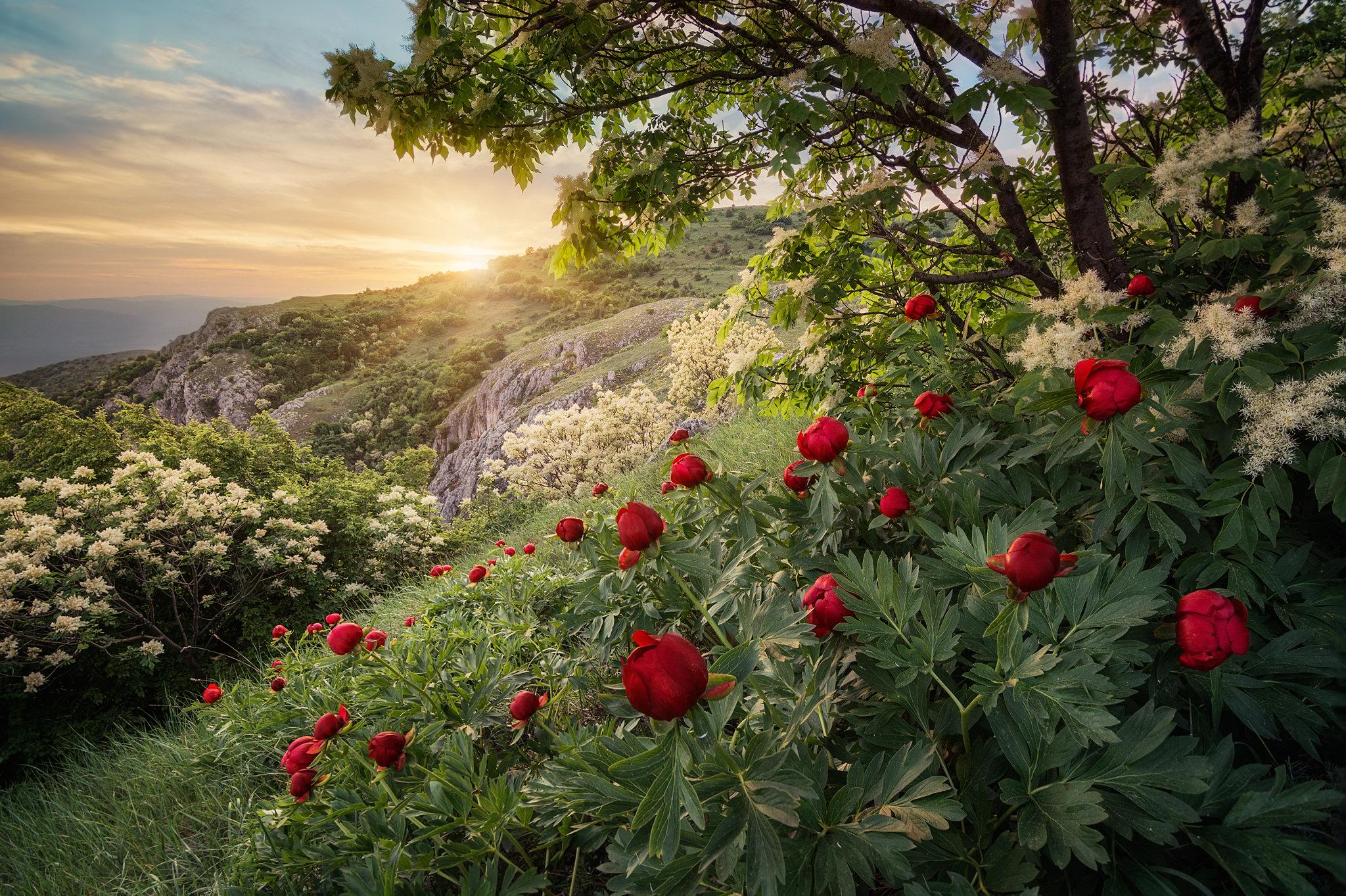 фото красивый розы в лес тонкими