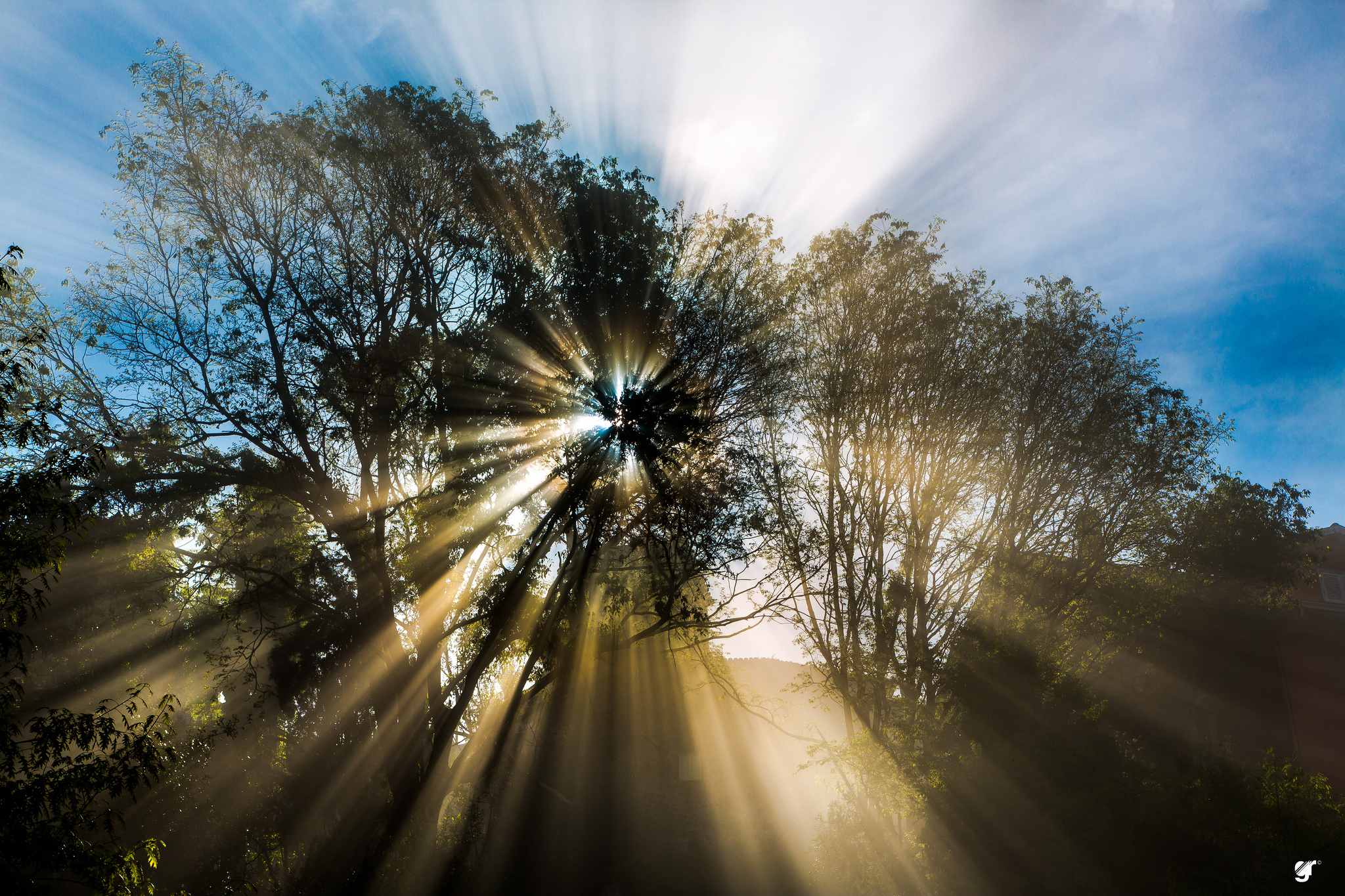 Фото весеннее солнышко
