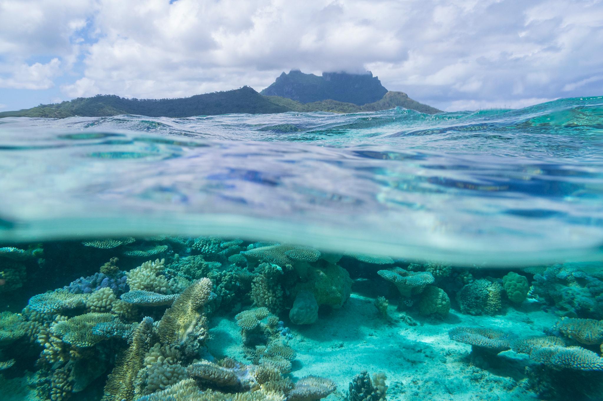 проверяет ухо картинки мировой океан популярные социальные