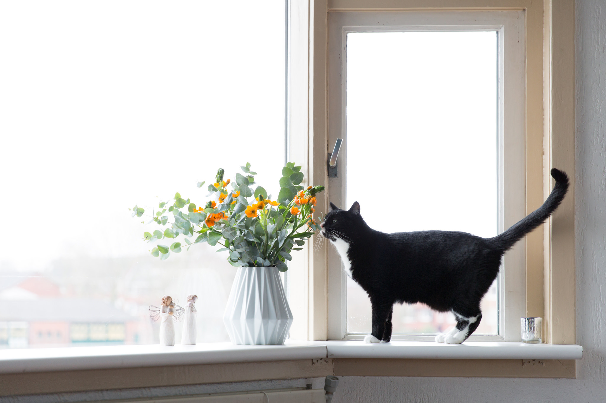 кот окно обои для рабочего стола № 570310 без смс