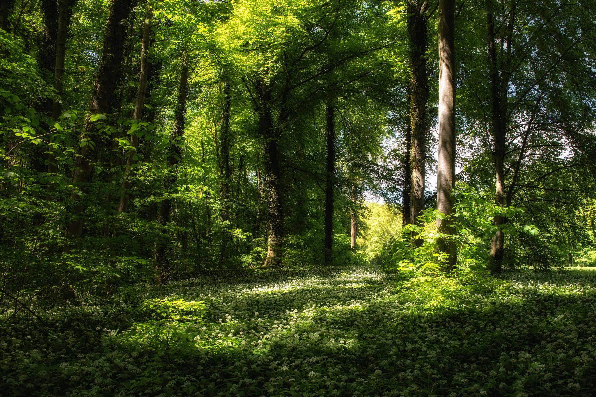 весной в лесу  № 113909  скачать