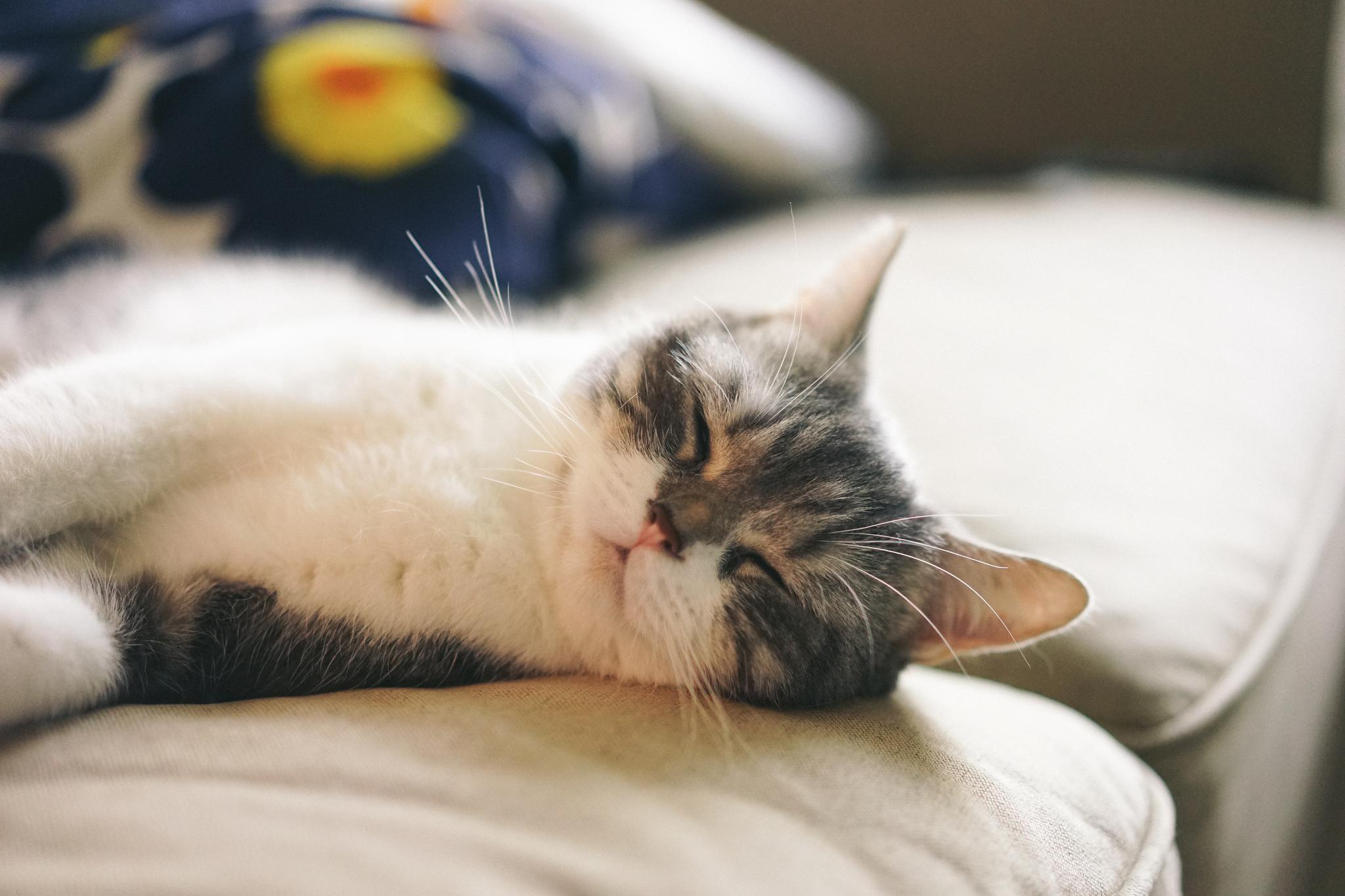 Ползу спать картинки