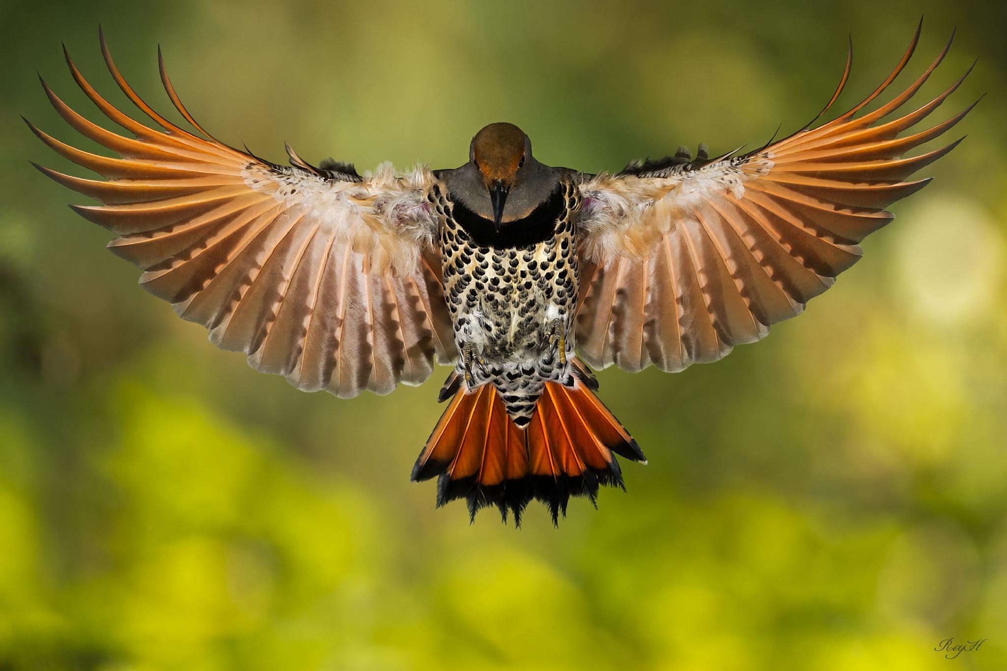 крыло птицы фотографии двойном шплинте