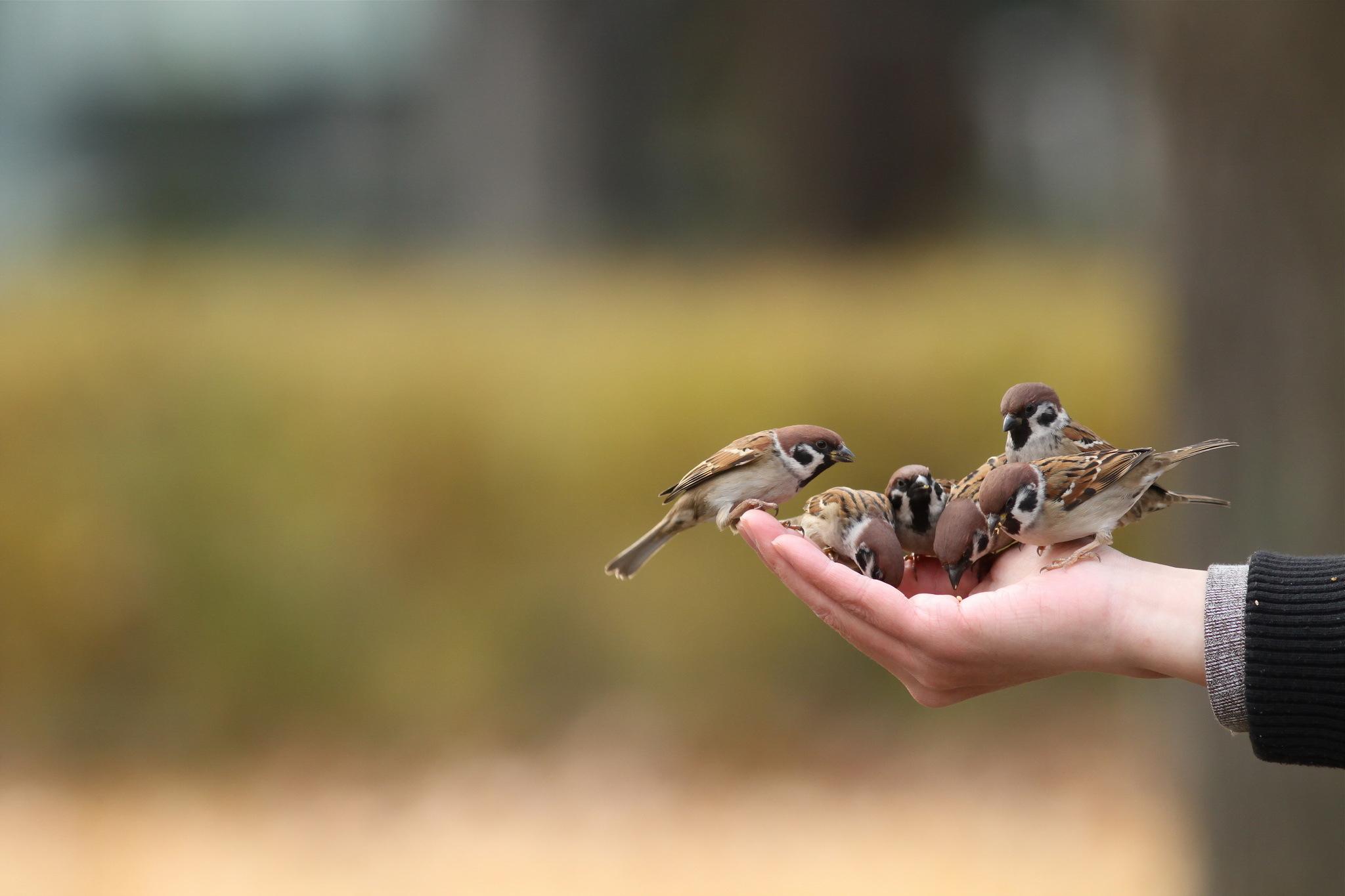 Картинки птицы в руках