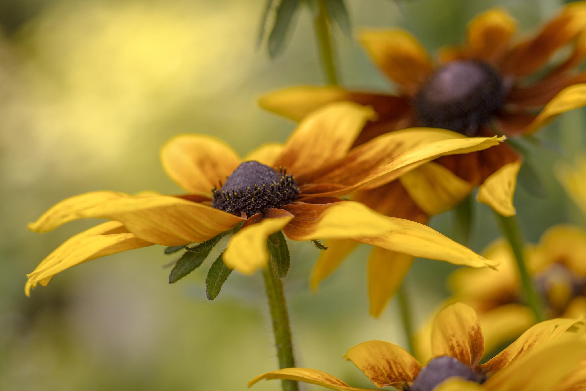 цветы макро желтые flowers macro yellow  № 910319 бесплатно