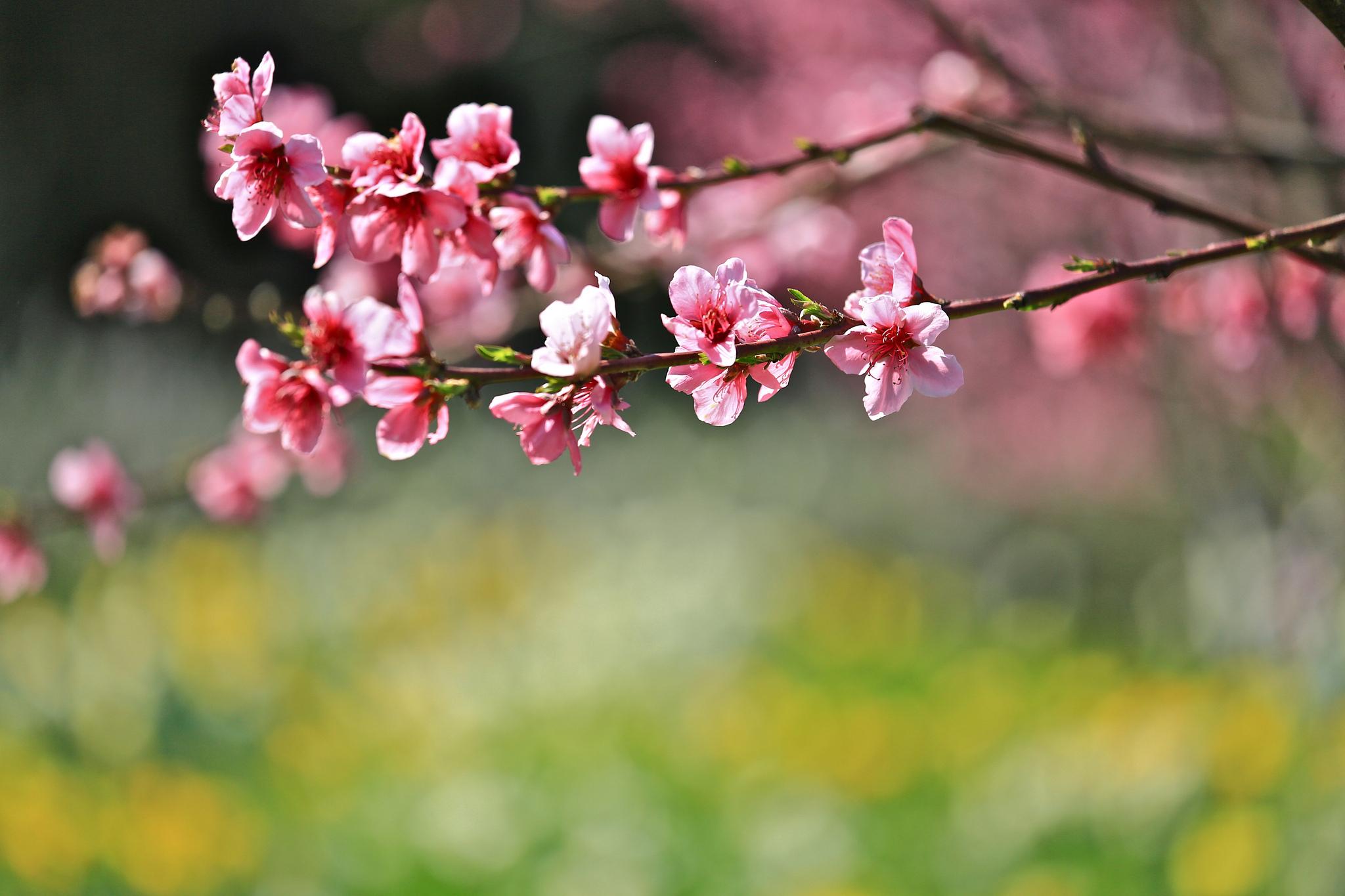 Картинка весна горизонтальная