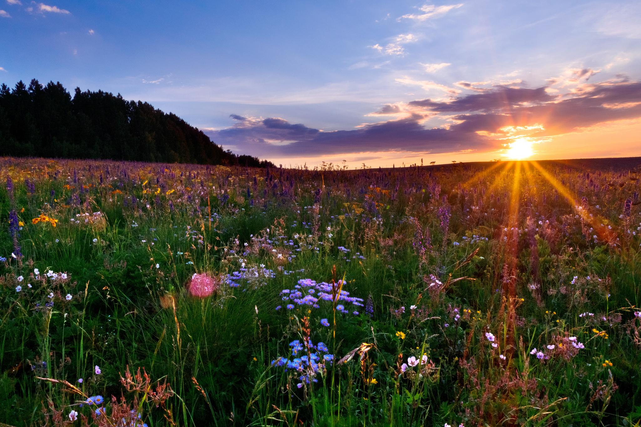 помощью красивые фото цветочных полей на рассвете зелёная плитка