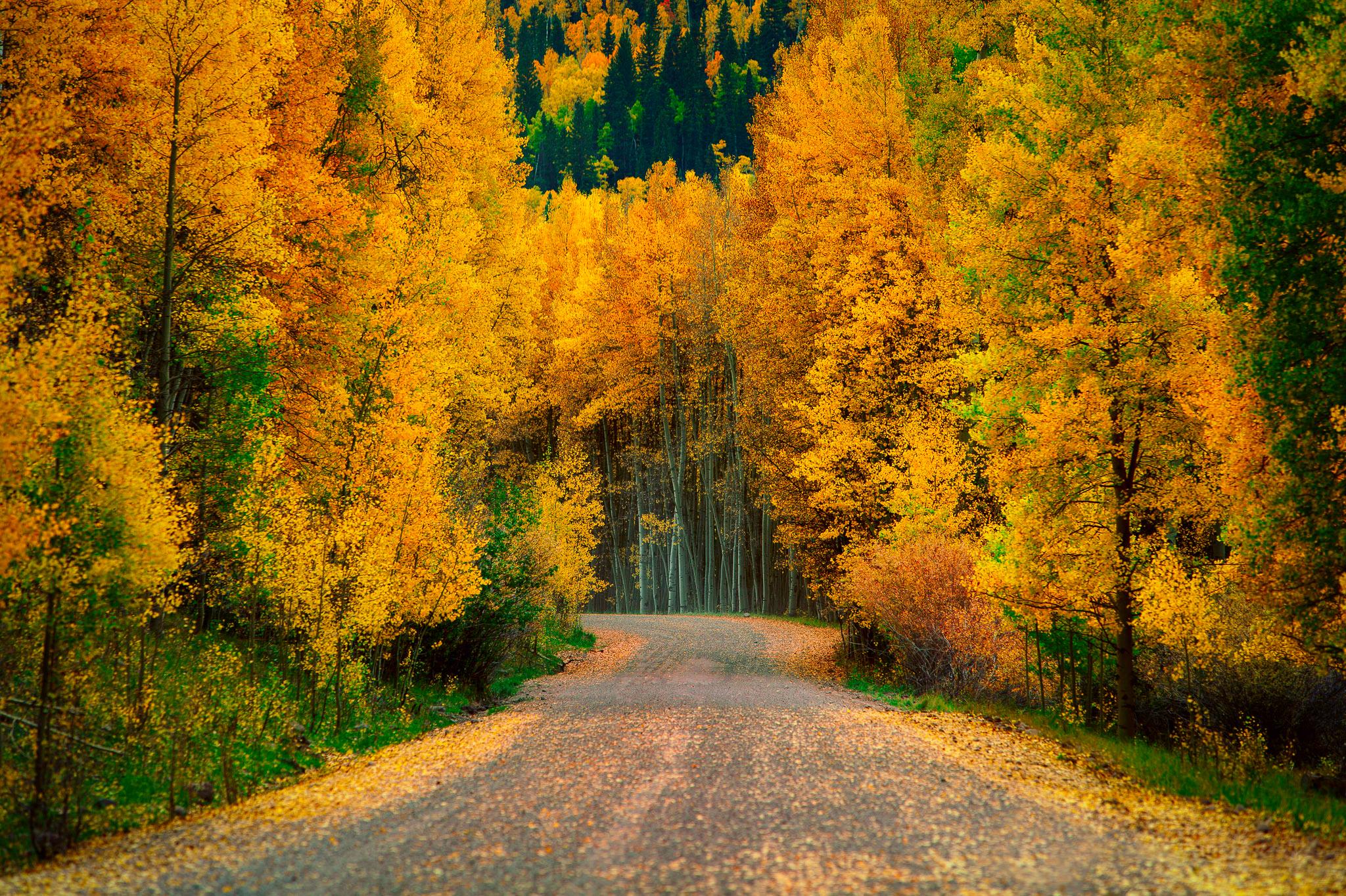 Февраля, осень в лесу открытки