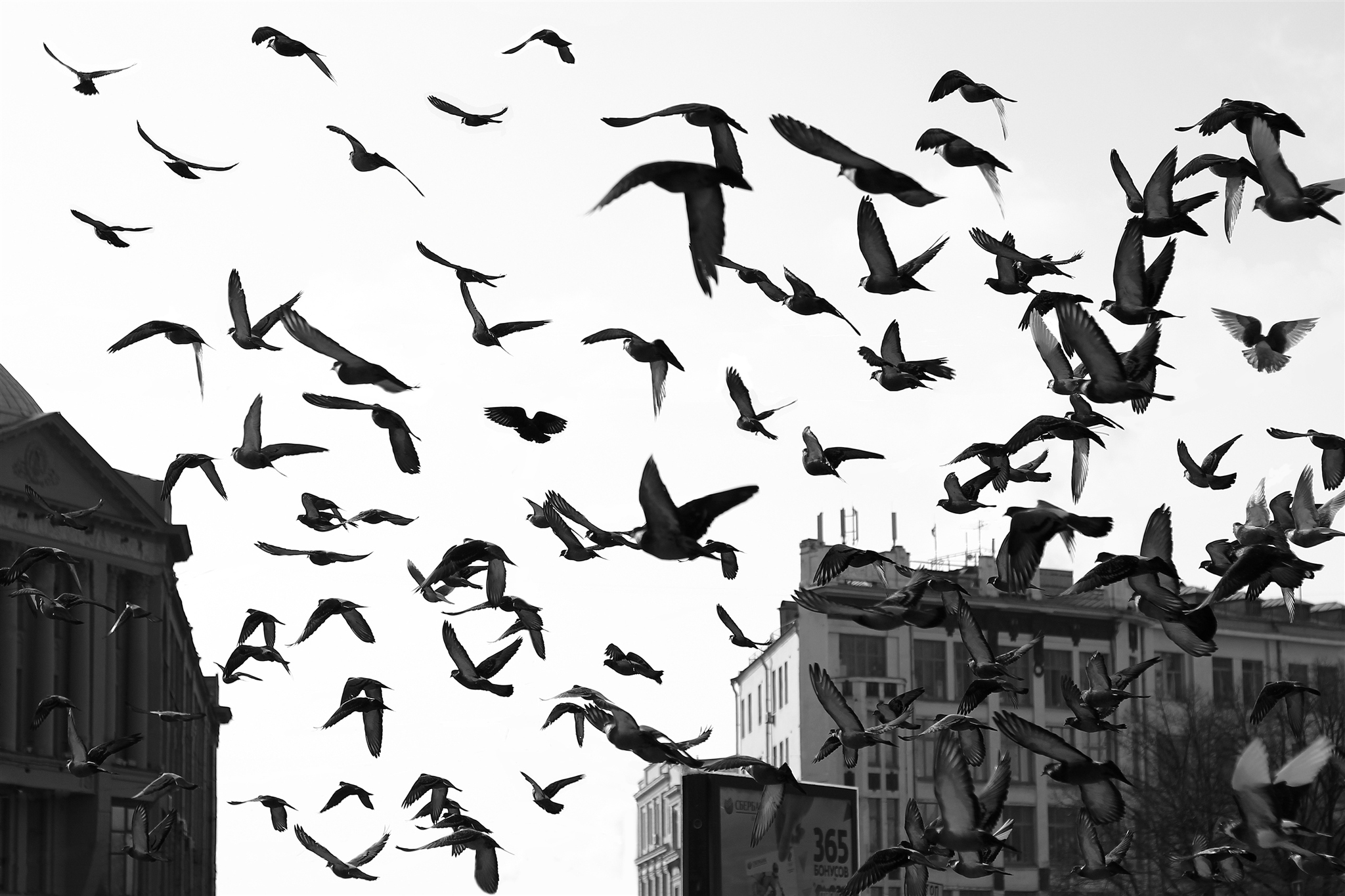 образования, птицы над городом данной странице предложены
