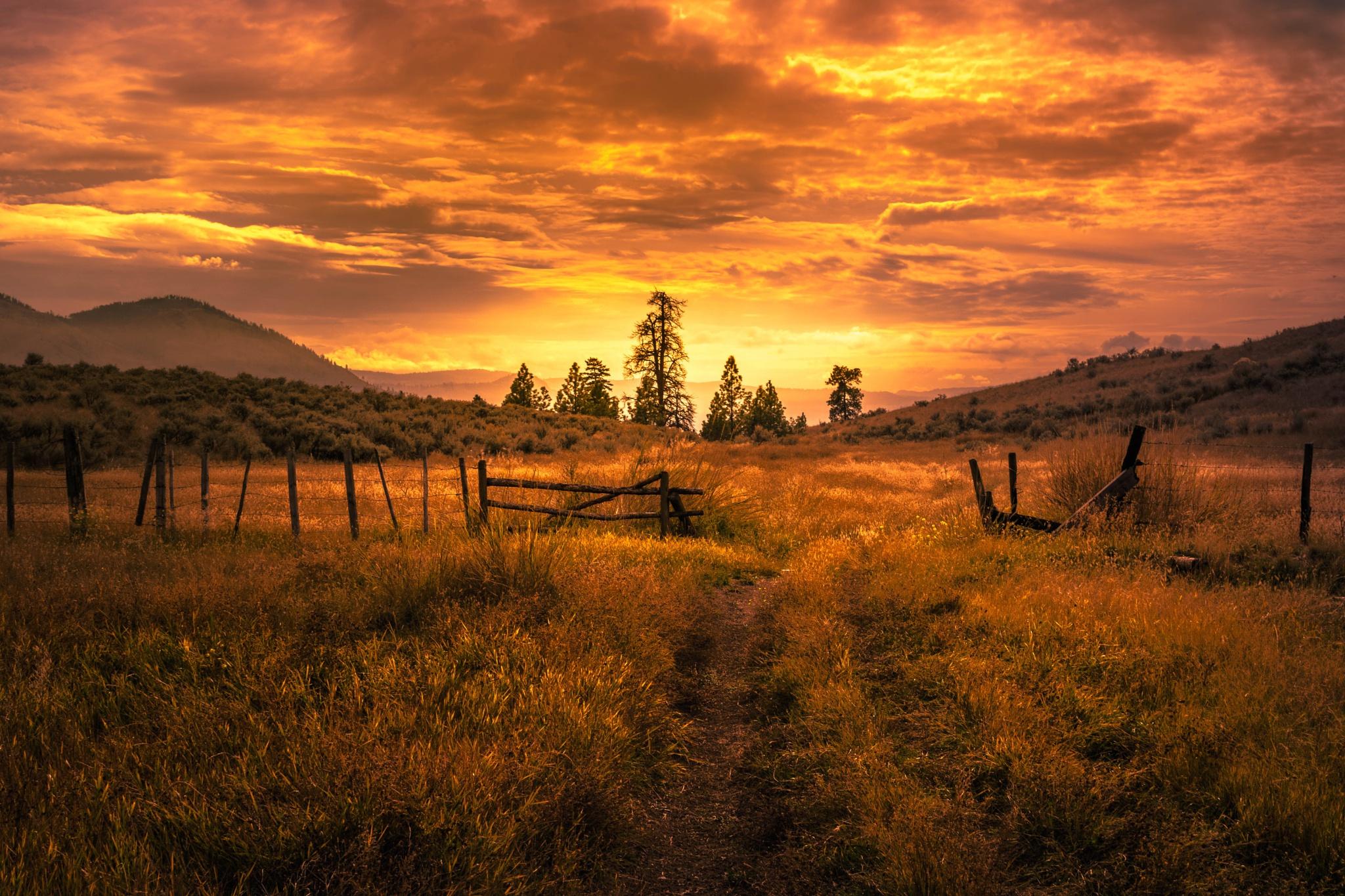 Закат дерево поля холмы  № 2965329 бесплатно