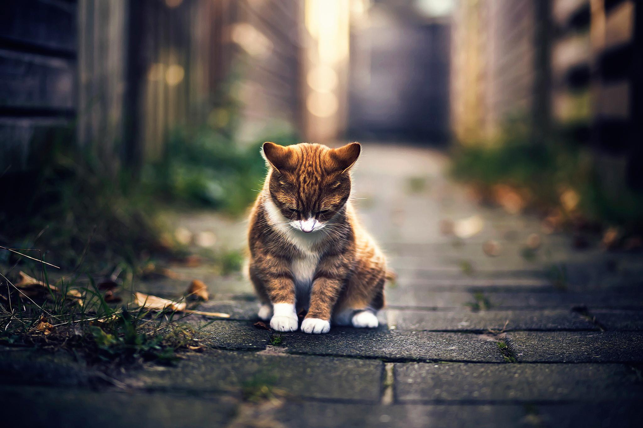 картинка грустного котенка веспуччи совершил