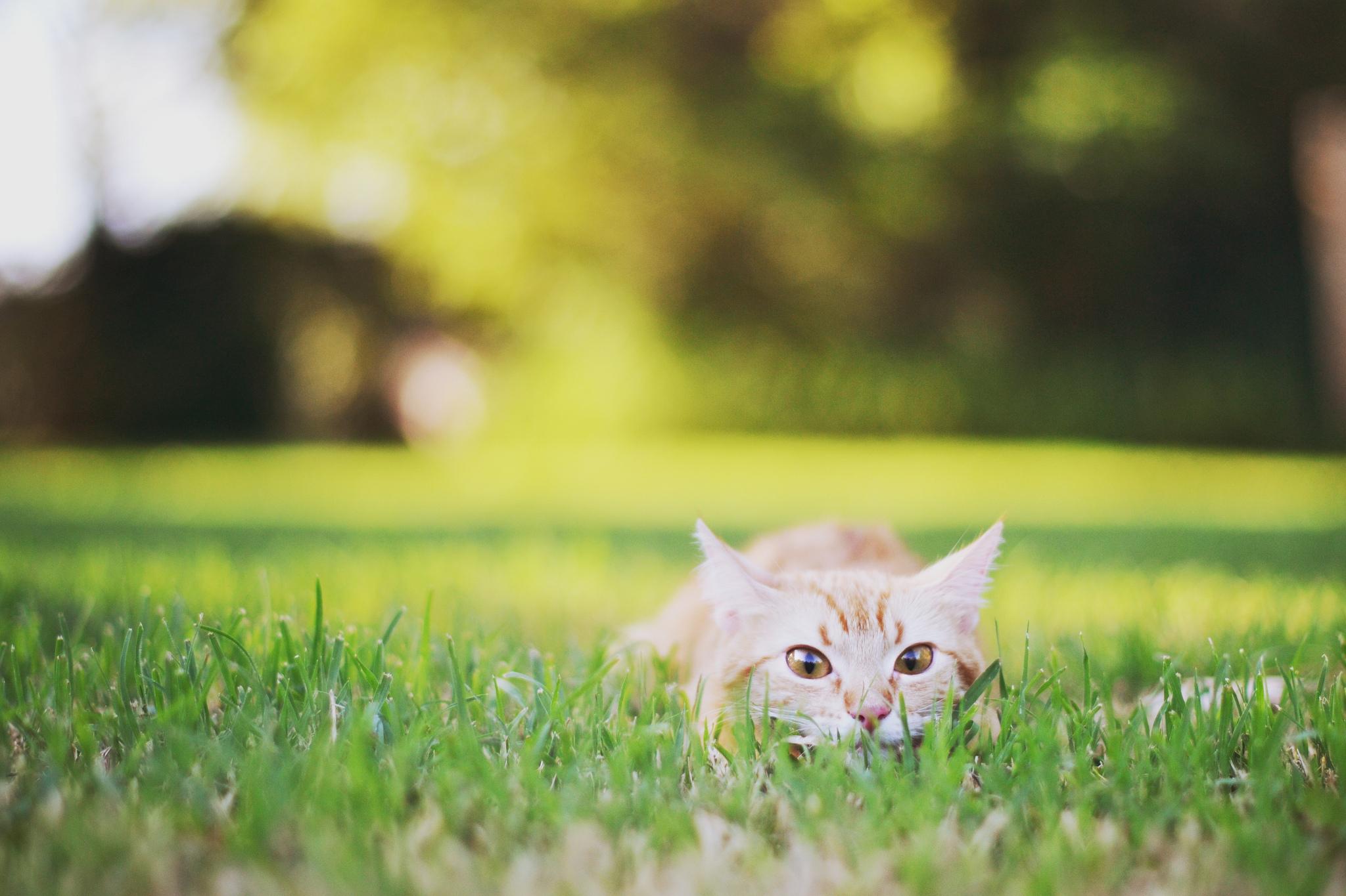 Котенок на траве  № 2959565 загрузить