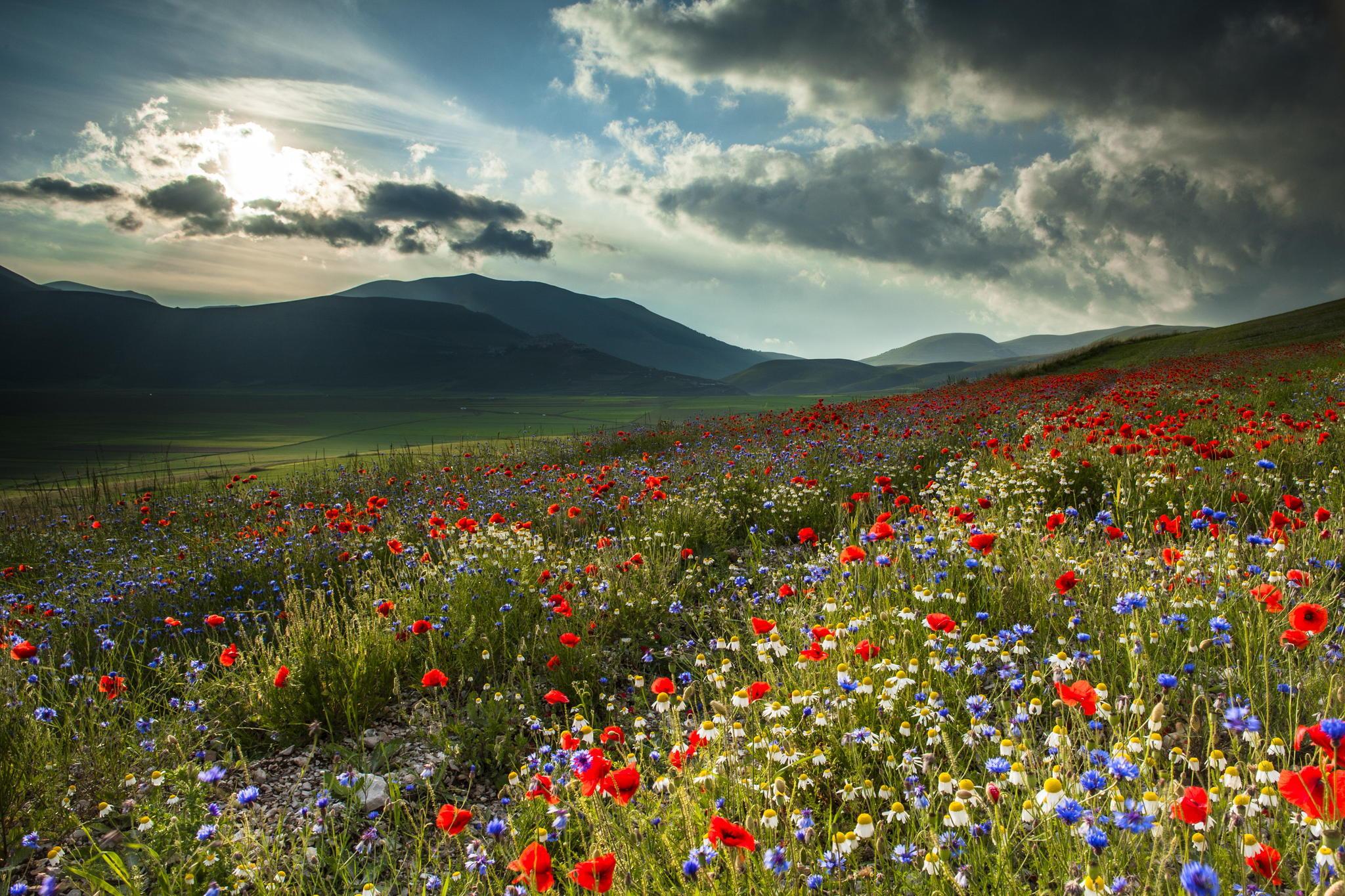 цветы поляна горы холм небо  № 3836186 без смс