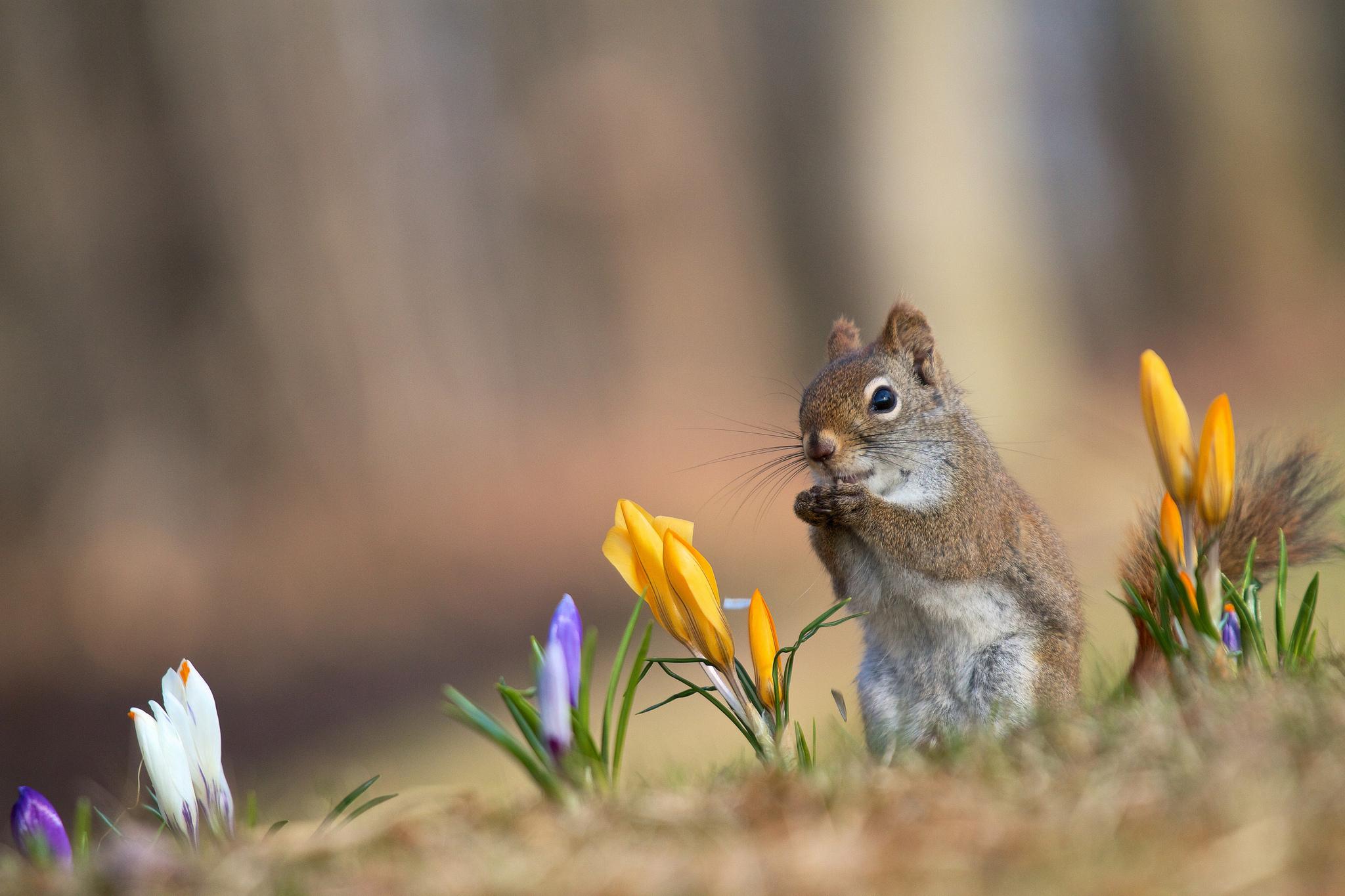 весна классные фото изготовление простого
