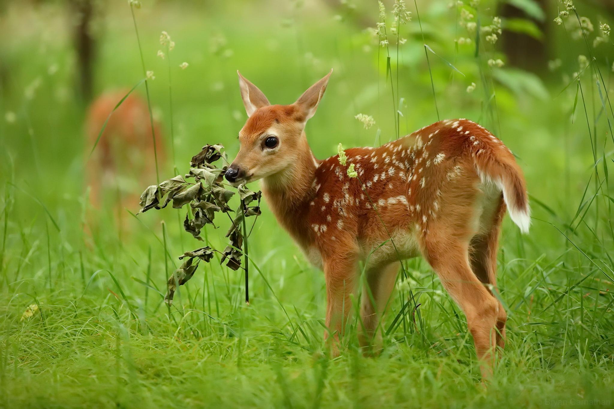 различия определяются фото природа и животных напечатать шикарные постановочные фотографии