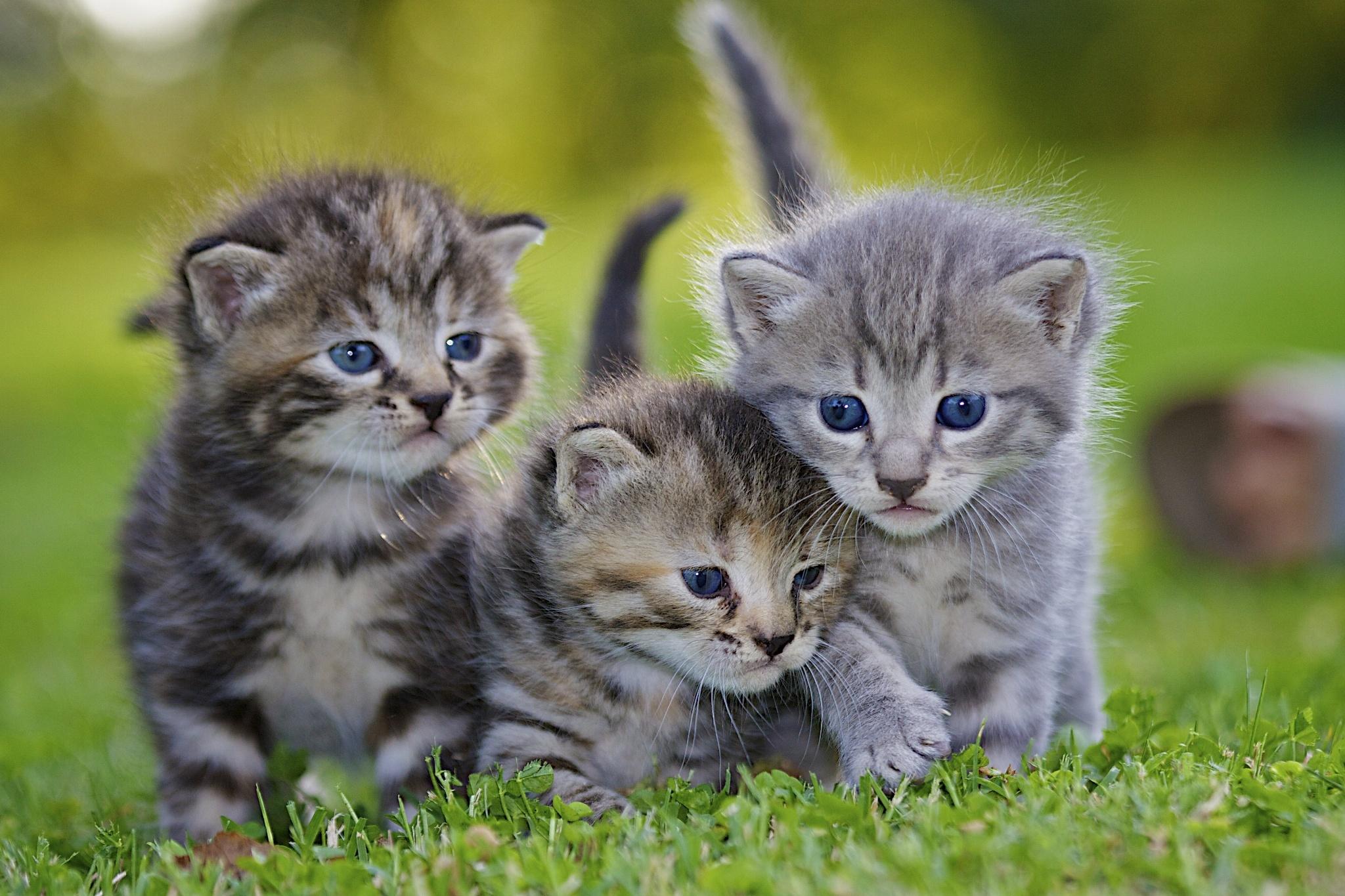 природа животные кот котенок серый журавлики nature animals cat kitten grey cranes  № 654696  скачать