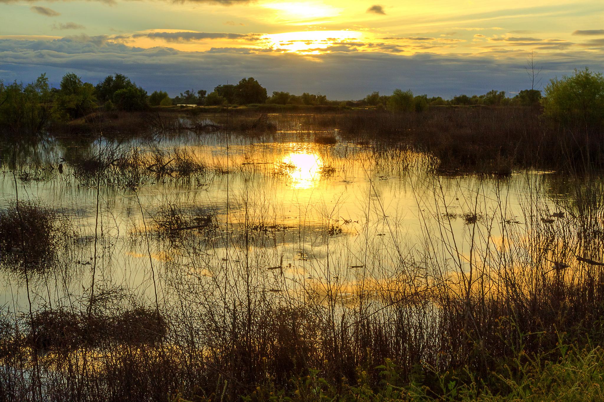 закат озеро осень трава  № 1020863 без смс