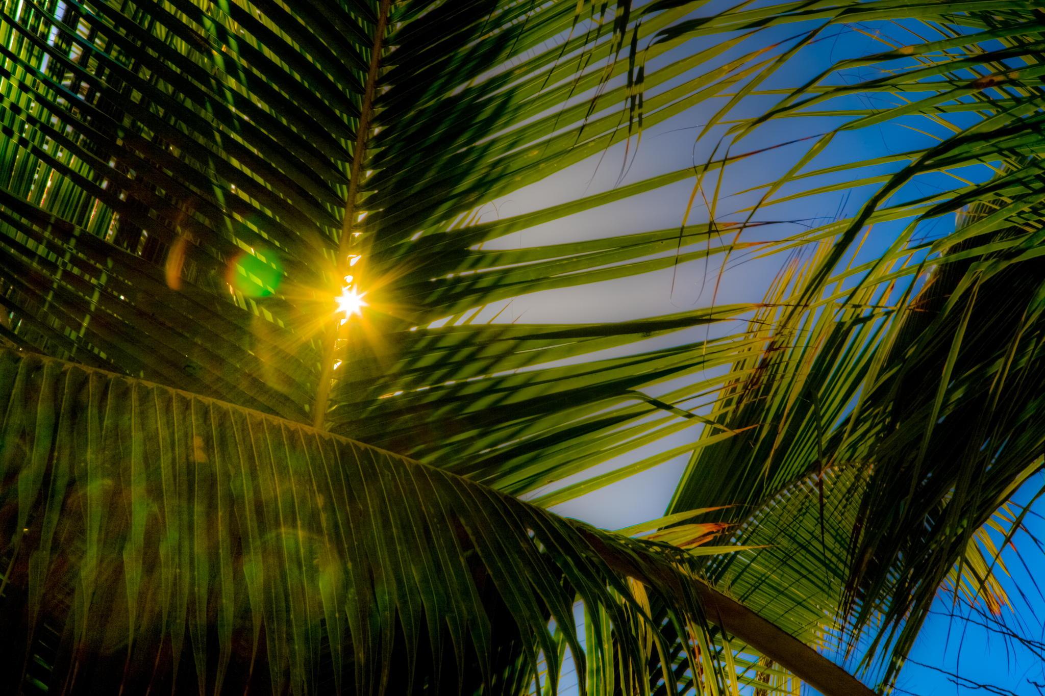 профессиональное фото море солнце ветка пальмы инструкции видеоролики