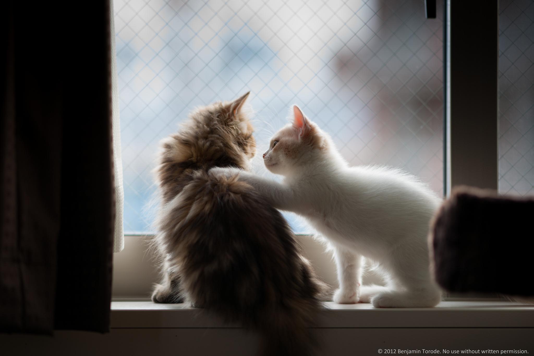 котята на окне kittens on the window  № 3063198 бесплатно