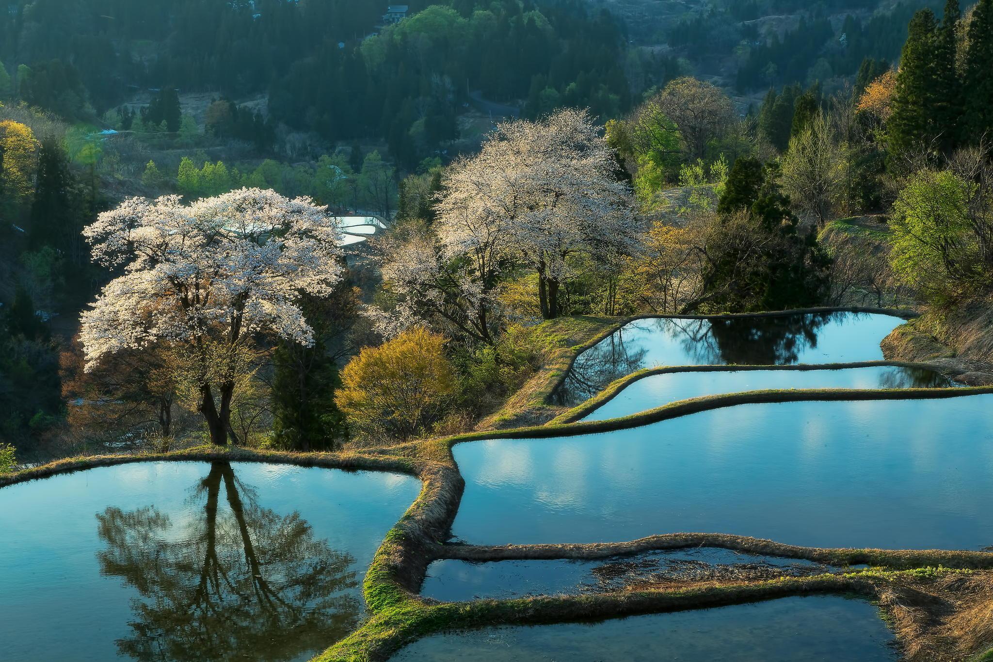 xinhua china anhui laian pond cypress scenery scenery - HD1920×1200