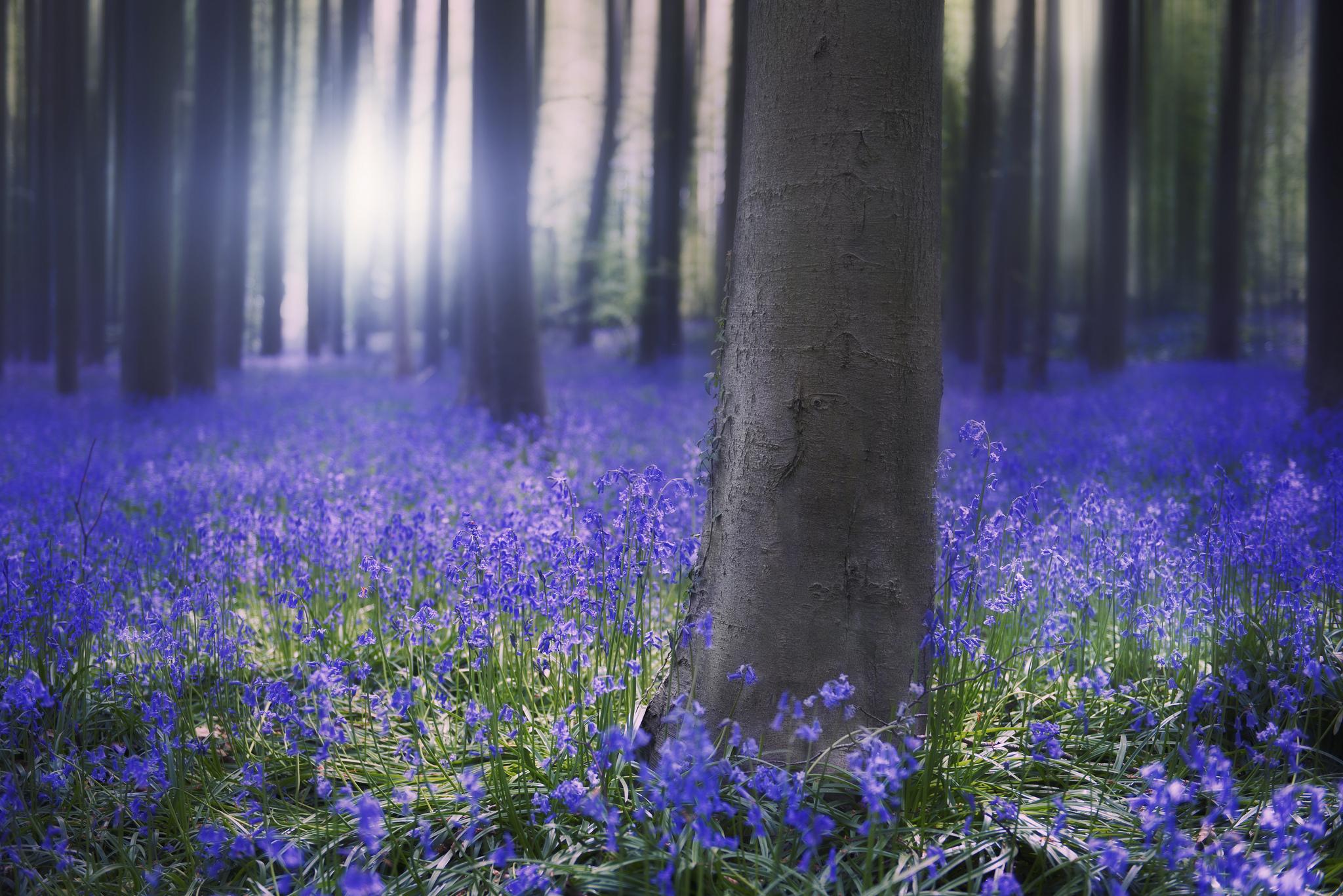 природа синие цветы nature blue flowers  № 1376508  скачать