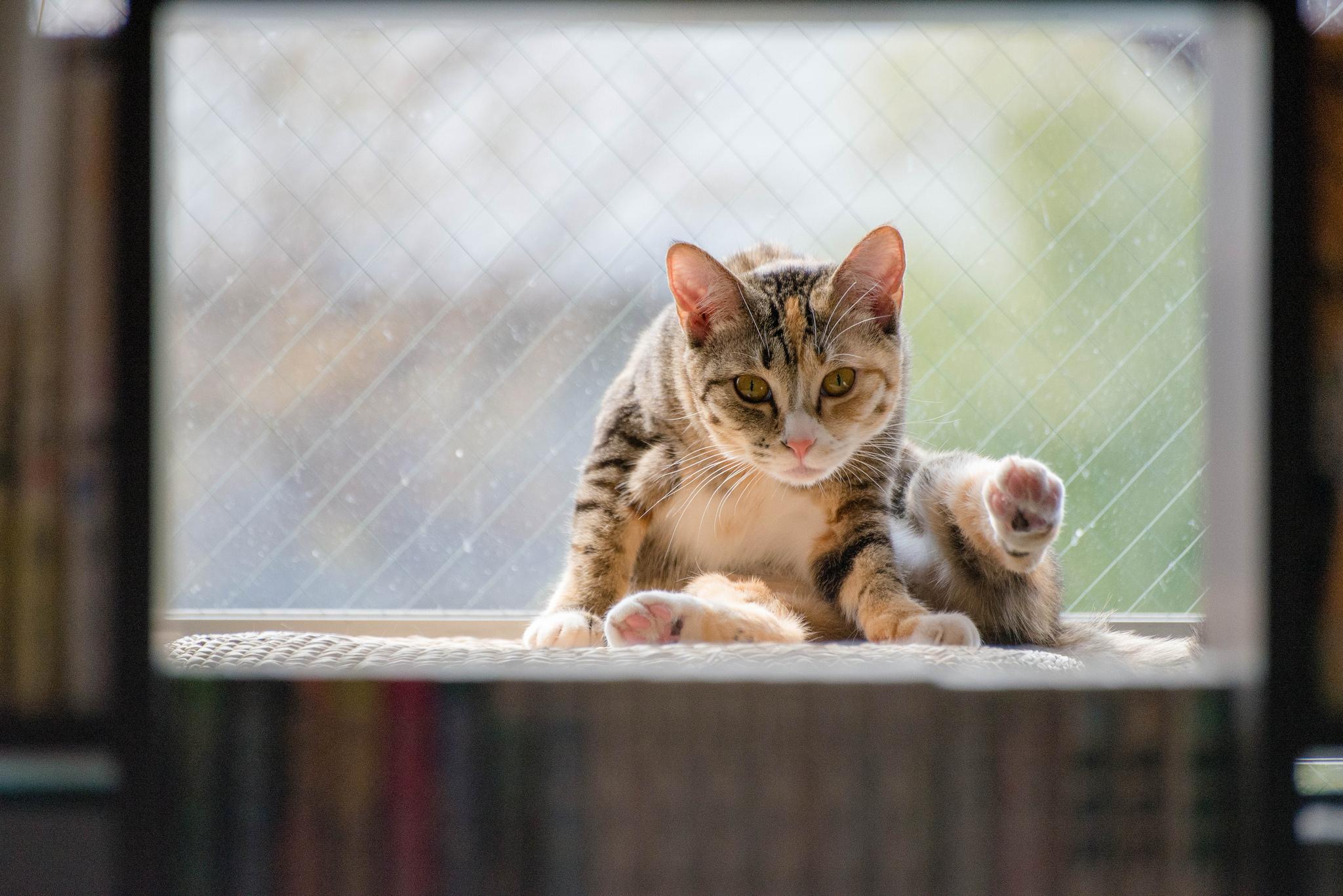 Кот окно обои для рабочего стола