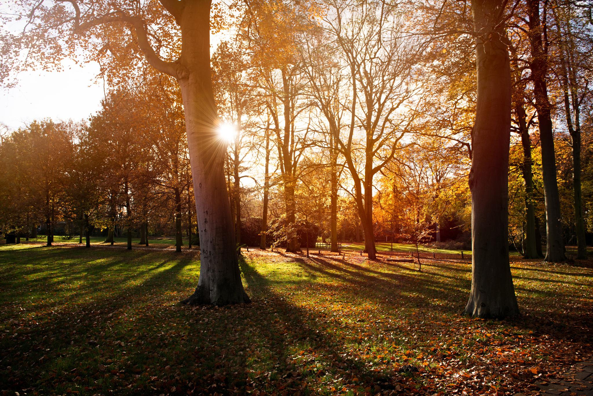 пара закат парк осень  № 1603056 бесплатно