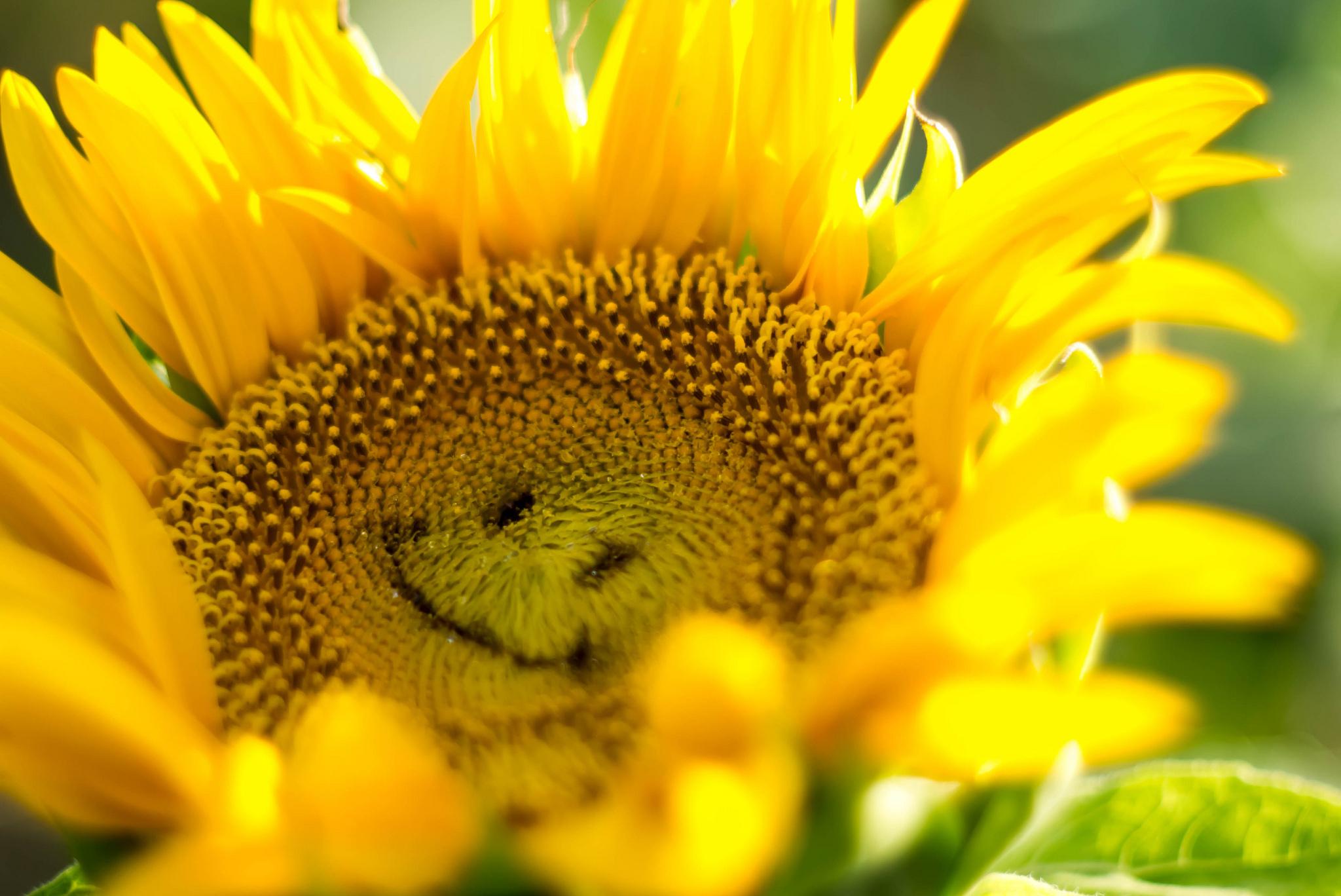 картинка цветы улыбаются пять минут отдыхающие
